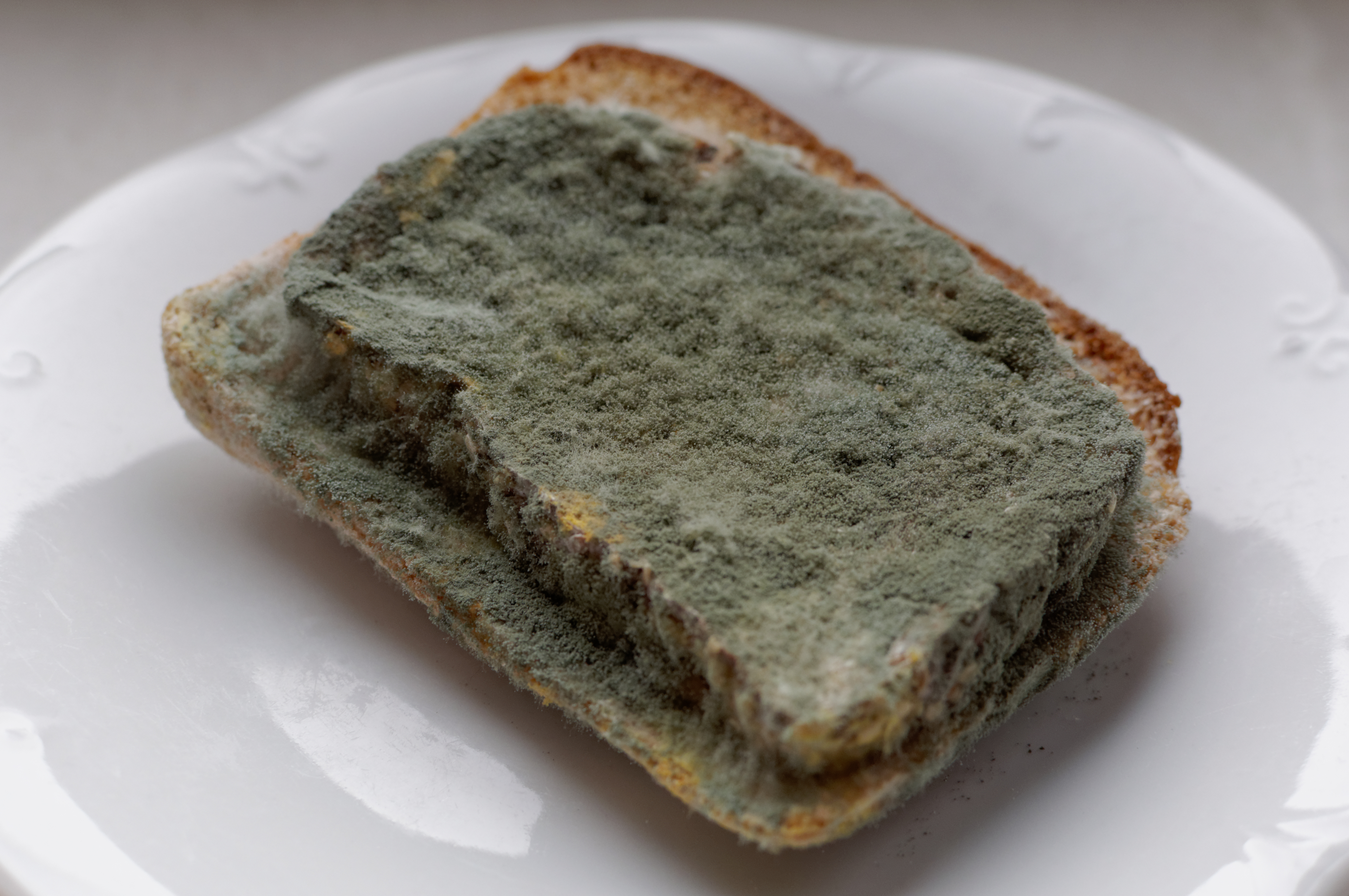 Image result for mould in bread