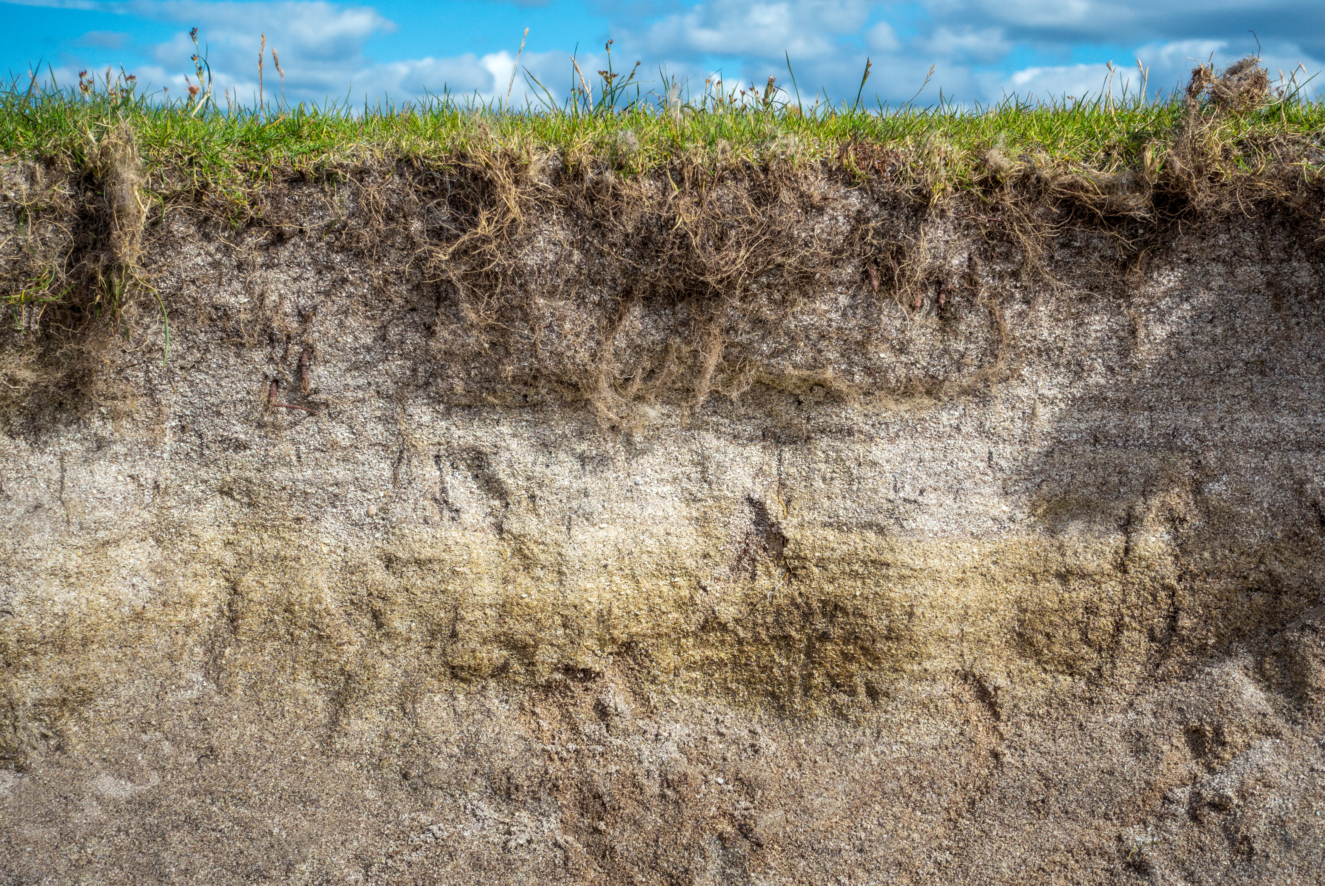 Characteristics of Sandy Loam Soil | Home Guides | SF Gate