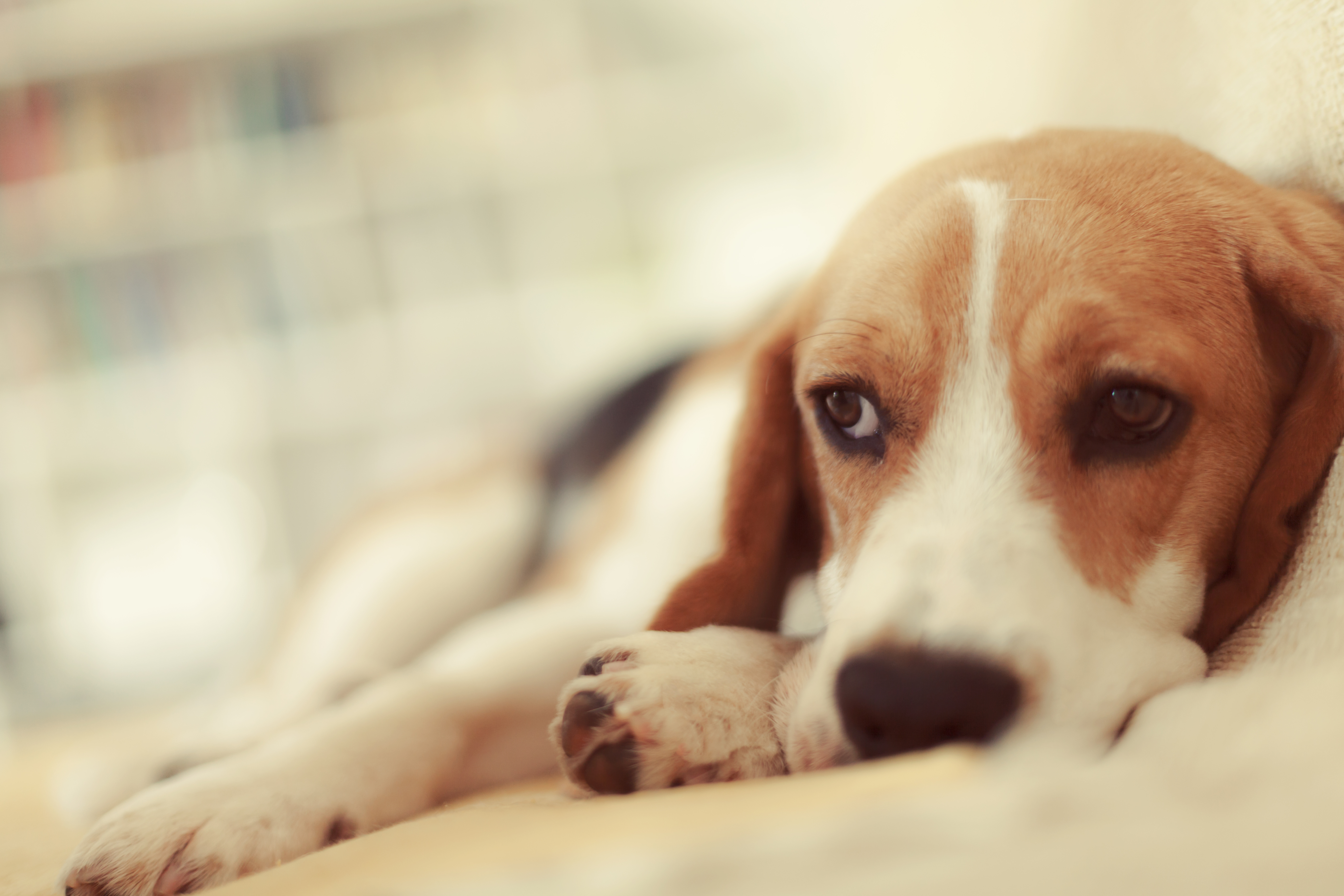 How The Last Stages Of Kidney Failure Affect Dogs Cuteness