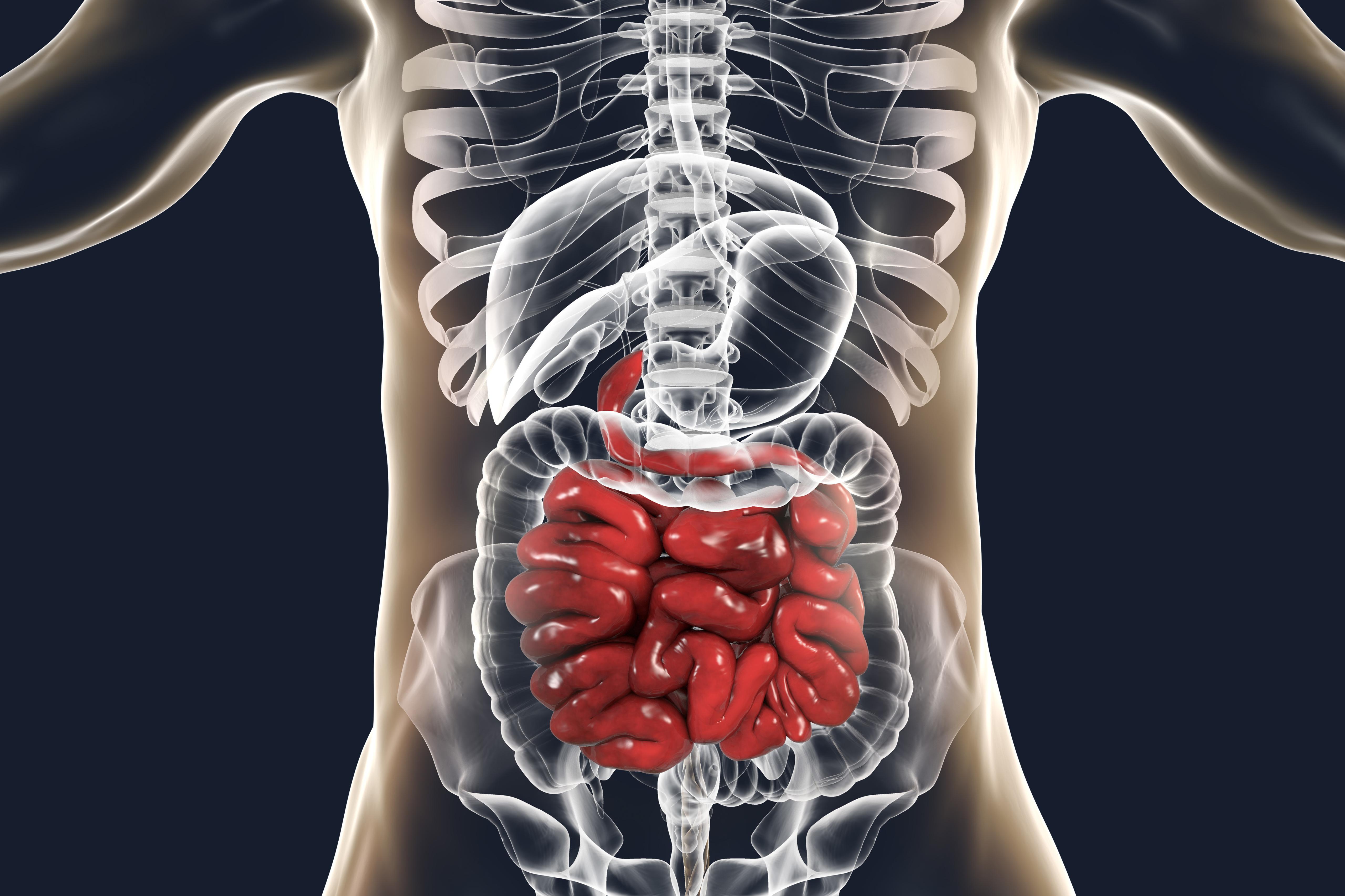 Oreganos del sistema digestivo yahoo dating