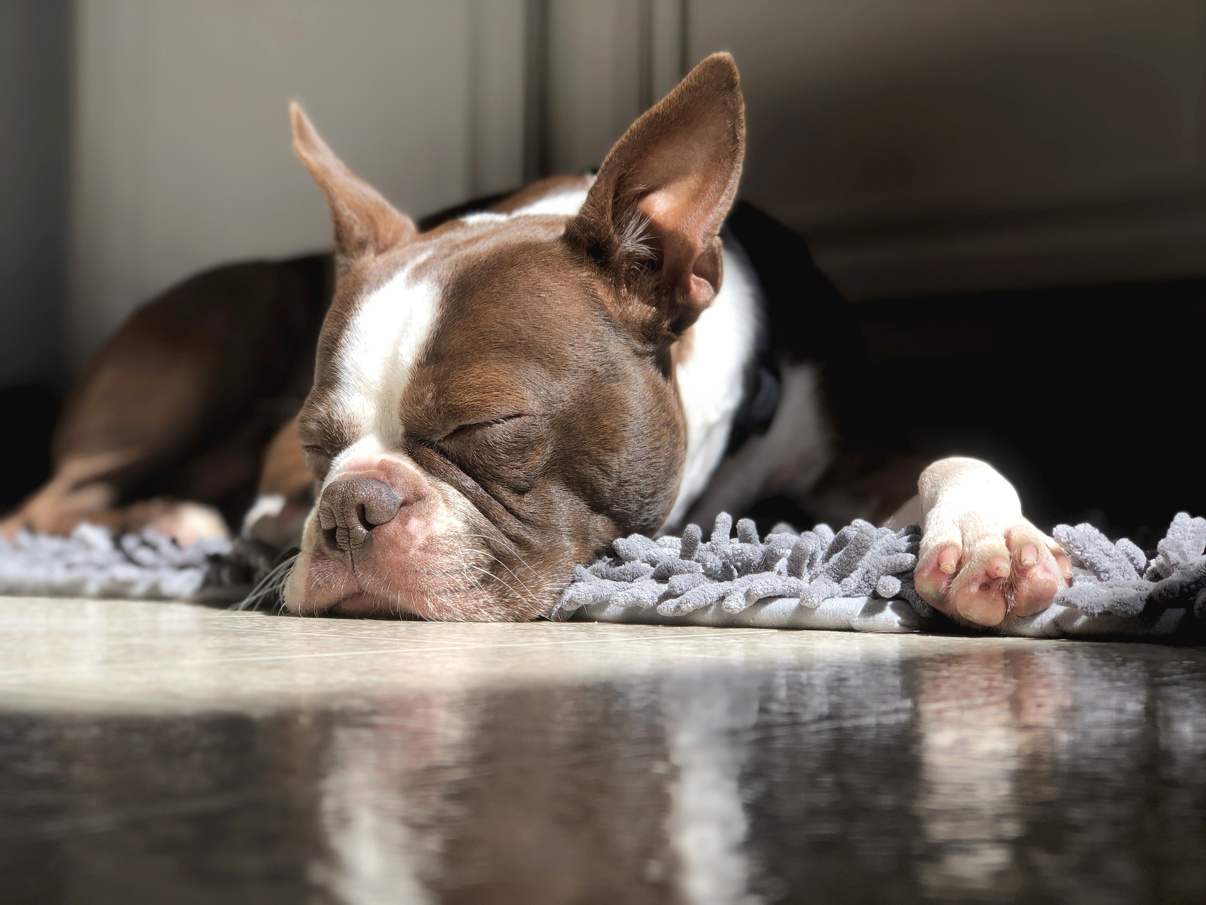 Why Do Dogs Grunt When They Are Relaxing? | Cuteness