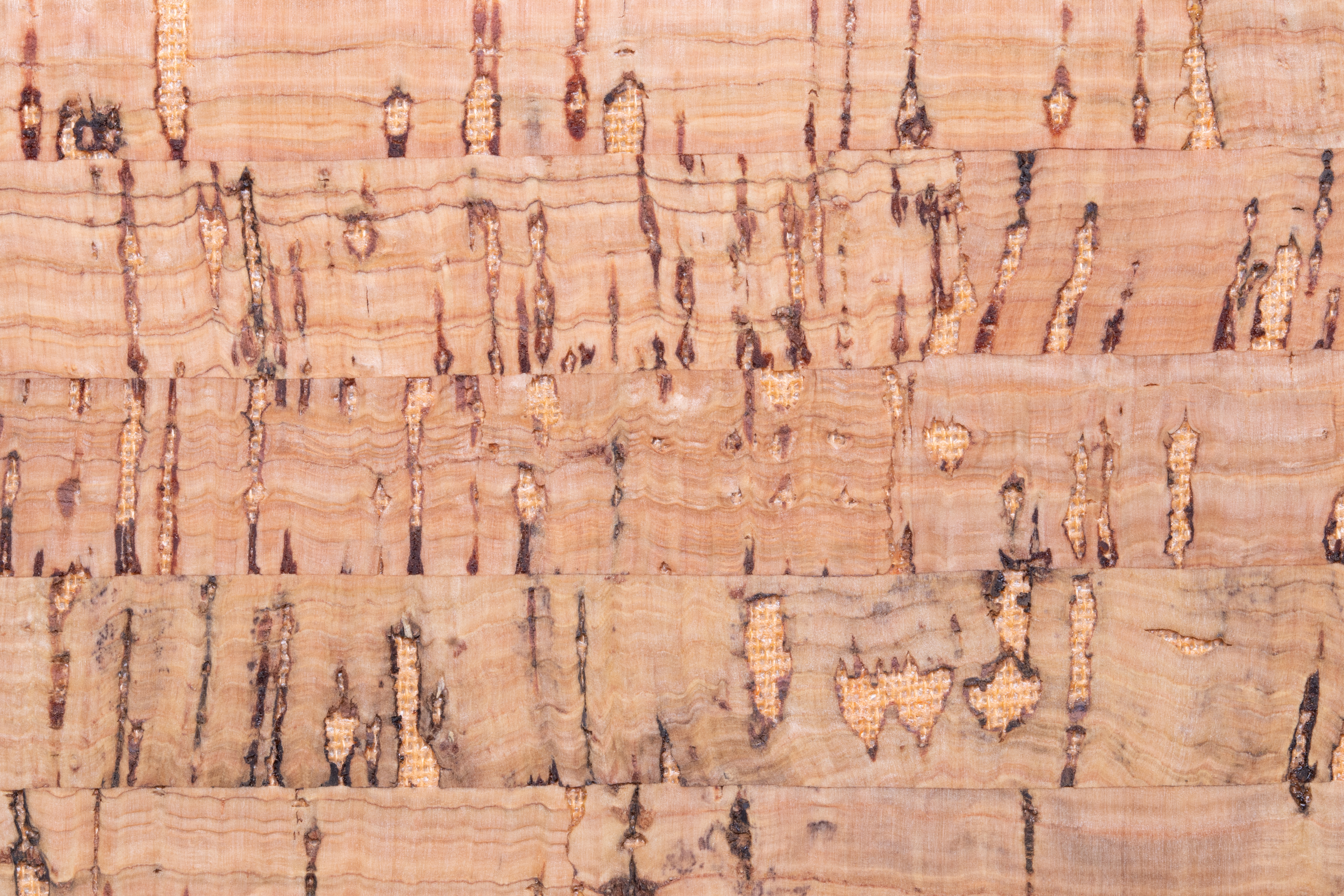 Cork Flooring: What You Need to Know