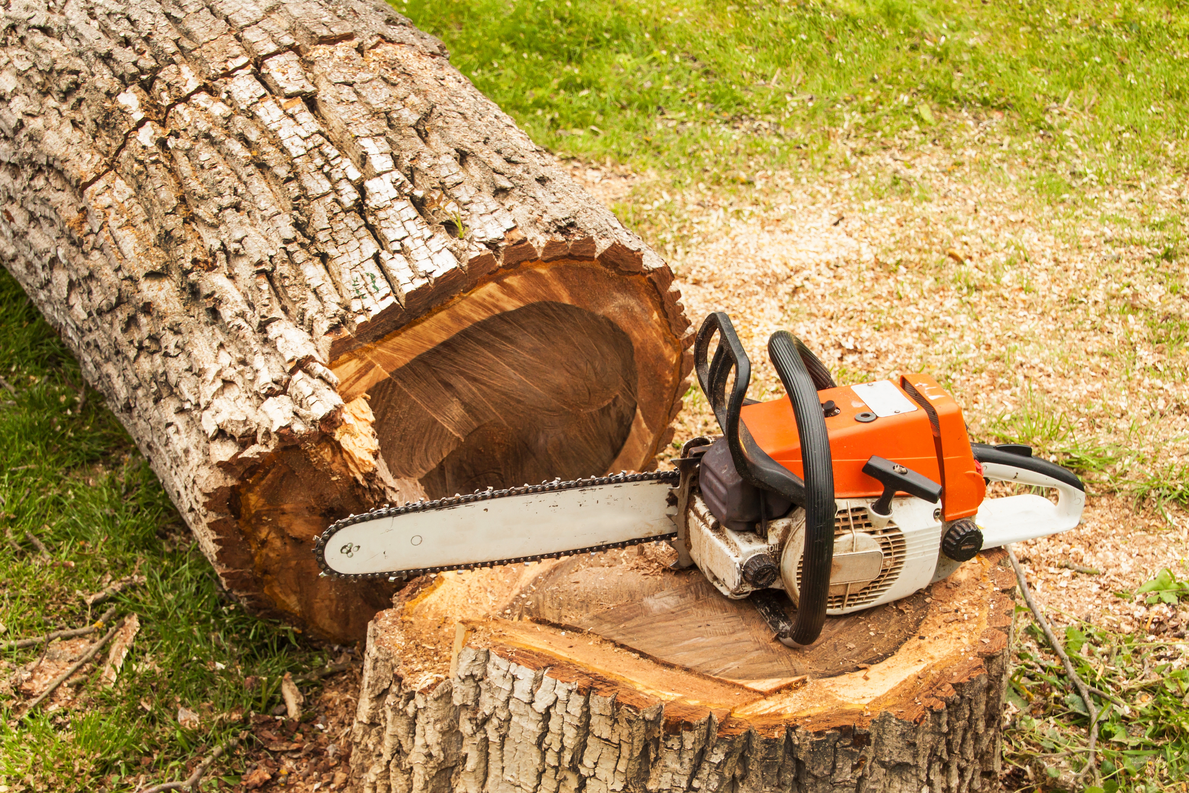 How To Troubleshoot A Chainsaw That Won't Start | Hunker