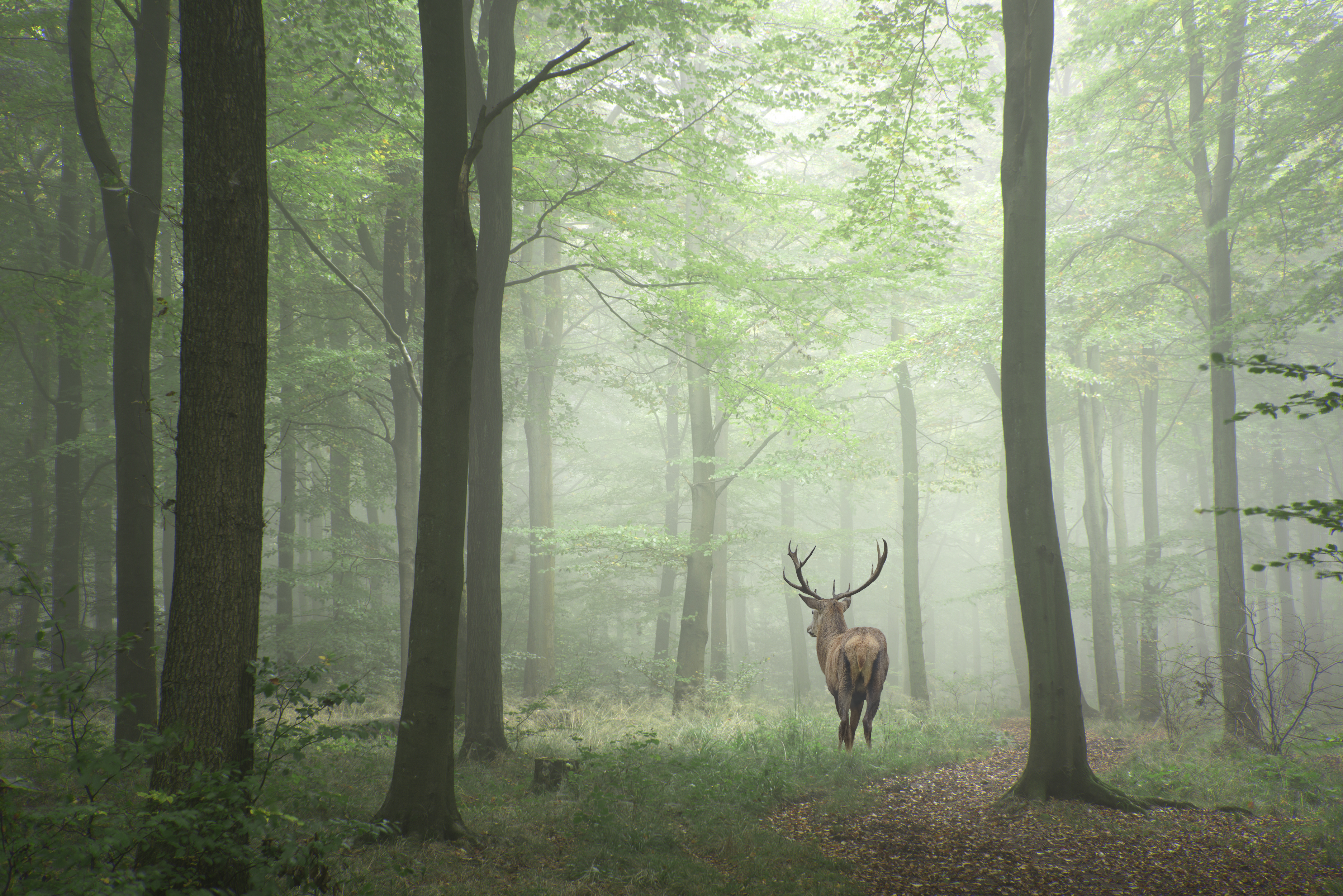 What Purpose Does The Deer Have In The Ecosystem Sciencing