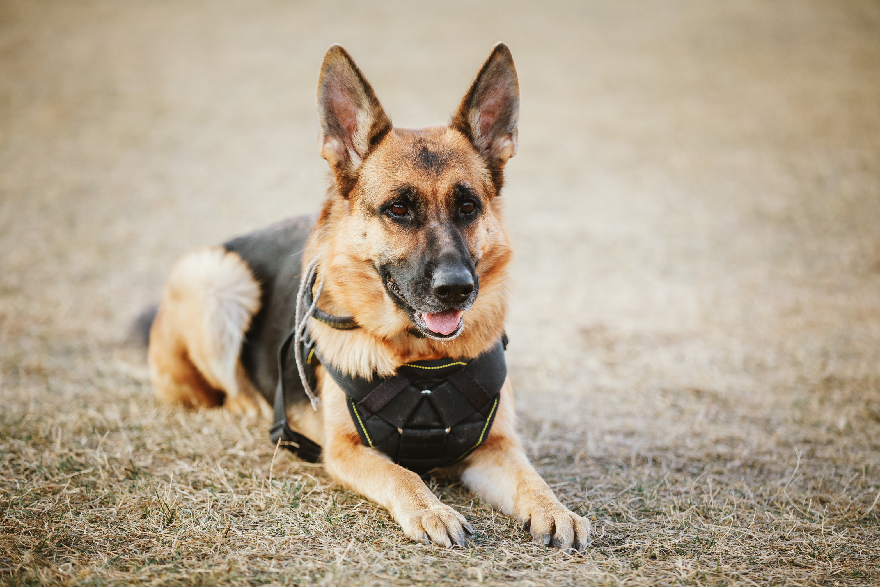 How to Donate a Dog for Law Enforcement | Animals - mom me