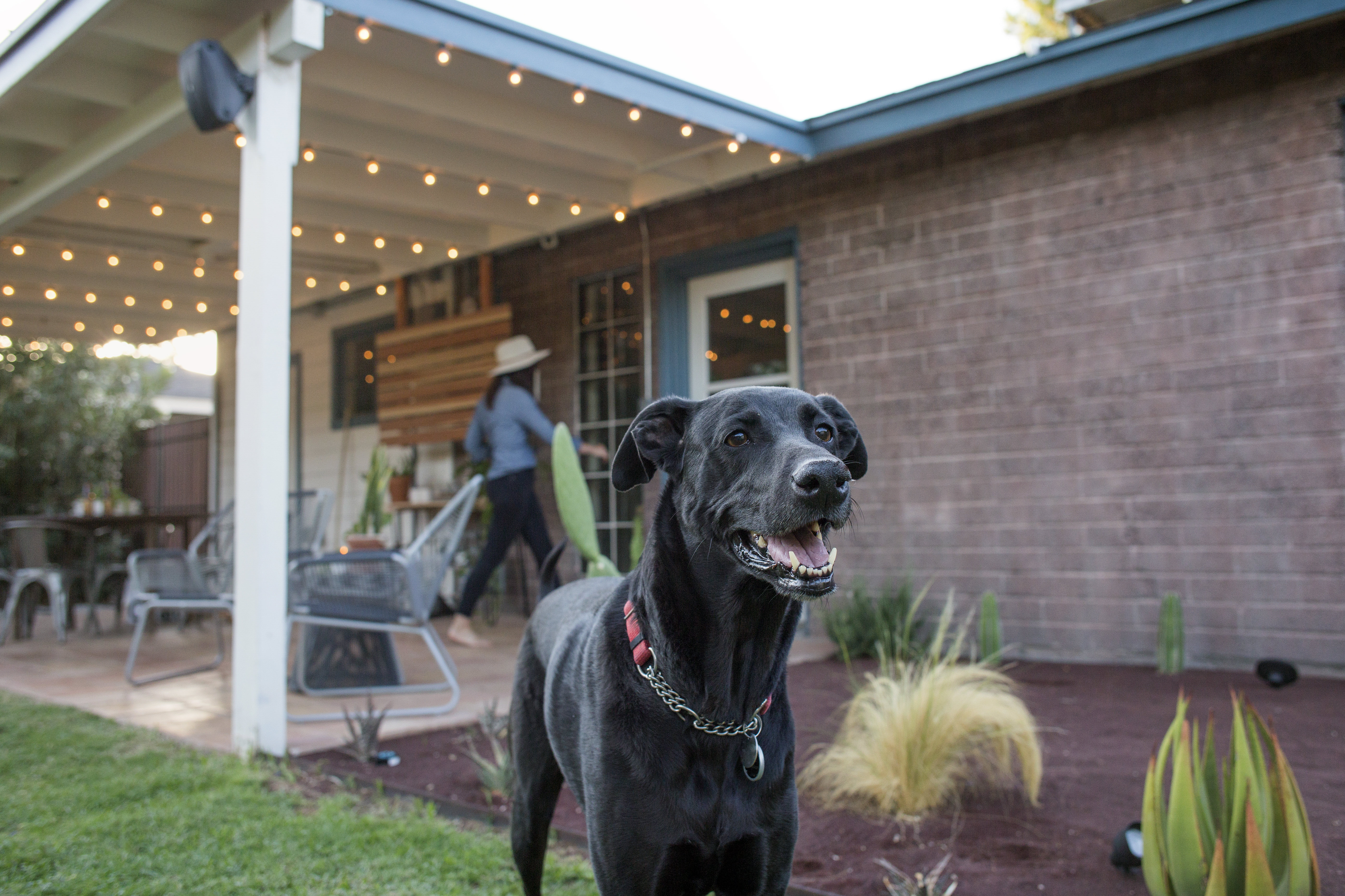 Lawn Types That Can Stand Up to Dogs   Home Guides   SF Gate