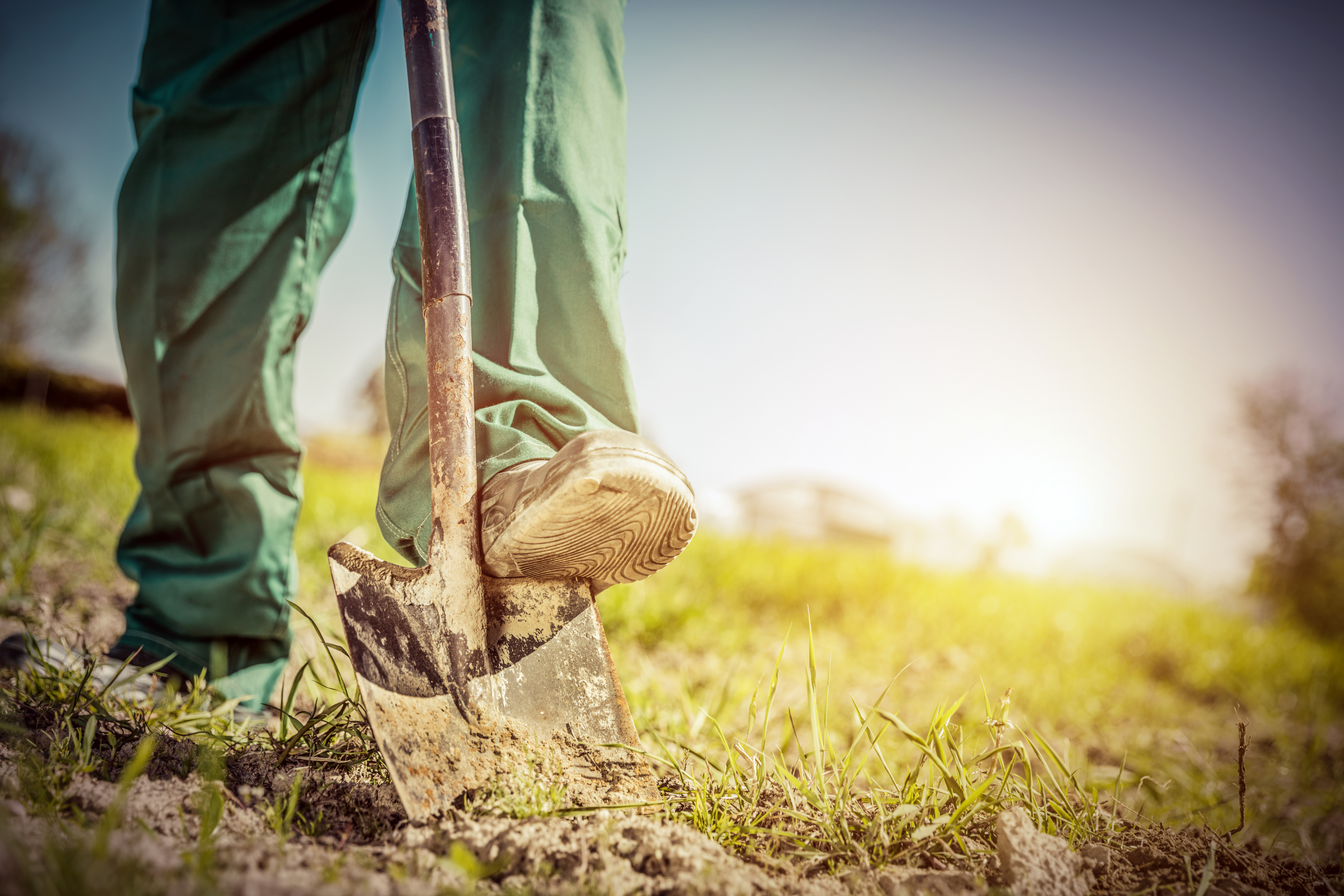 What Causes Piles of Dirt in Your Yard? | Home Guides | SF Gate