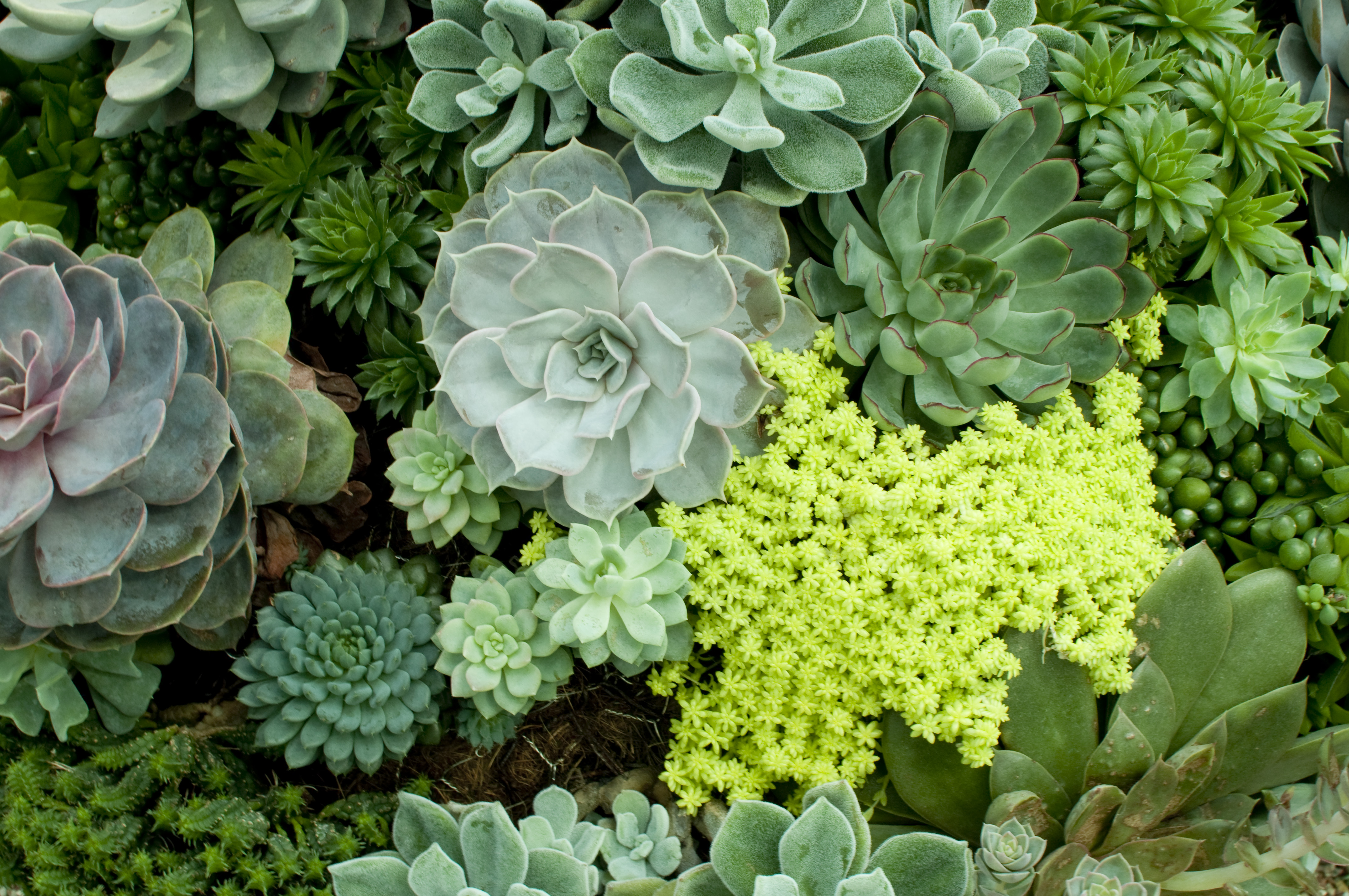 How To Grow Succulents In Containers
