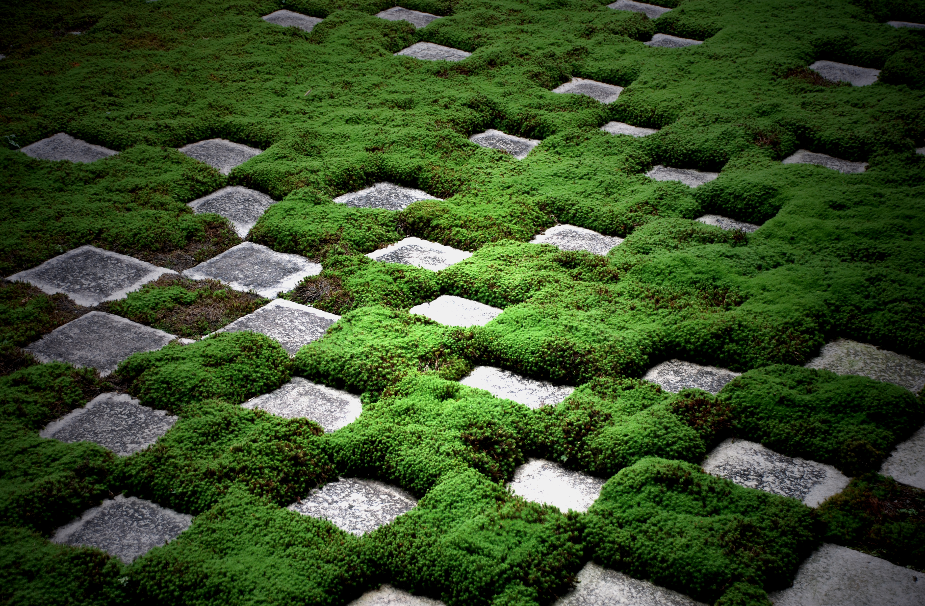 How To Get Rid Of Moss On Pavers Home Guides Sf Gate
