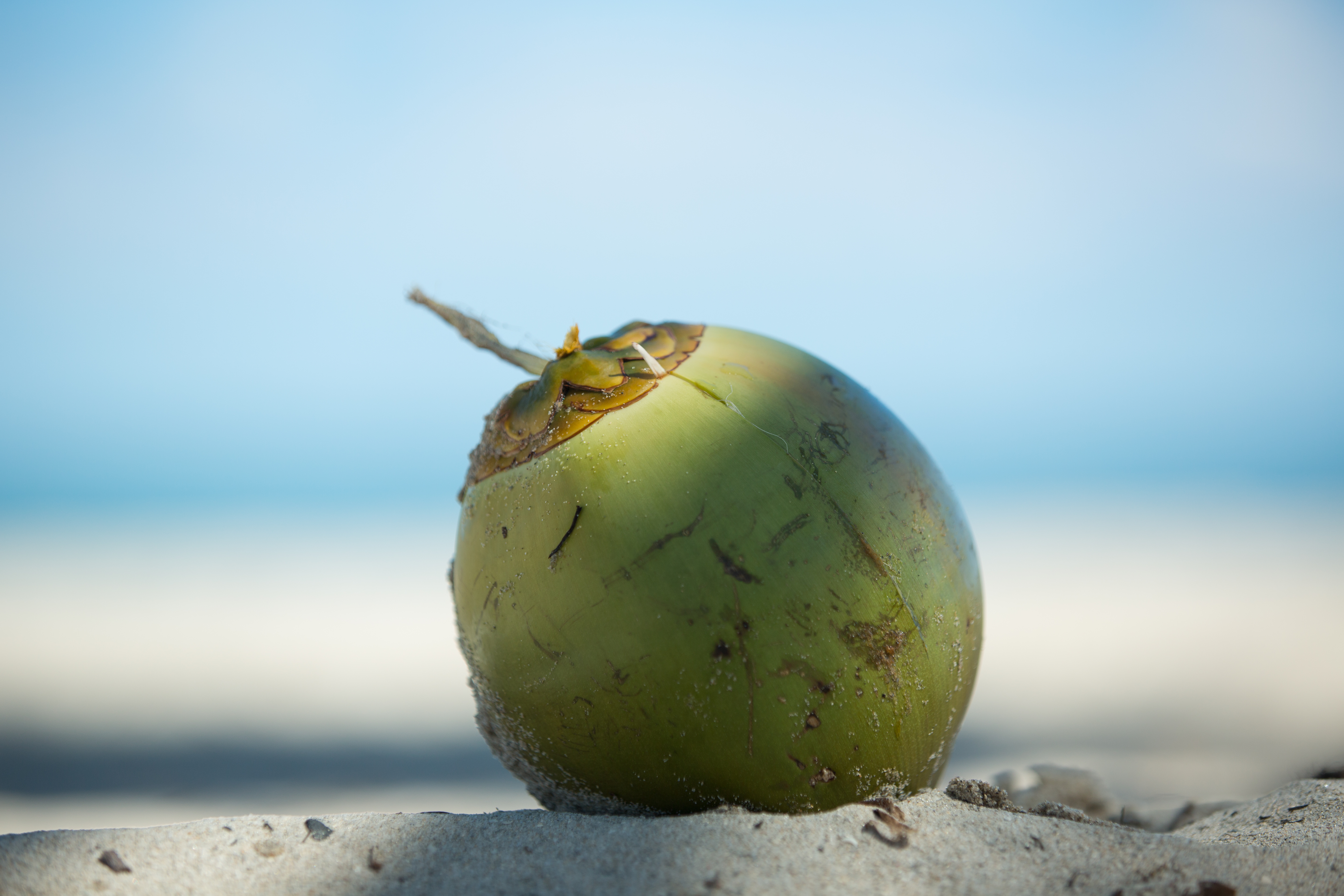 How to Tell When Coconuts Are Ripe on the Tree | Home Guides | SF Gate