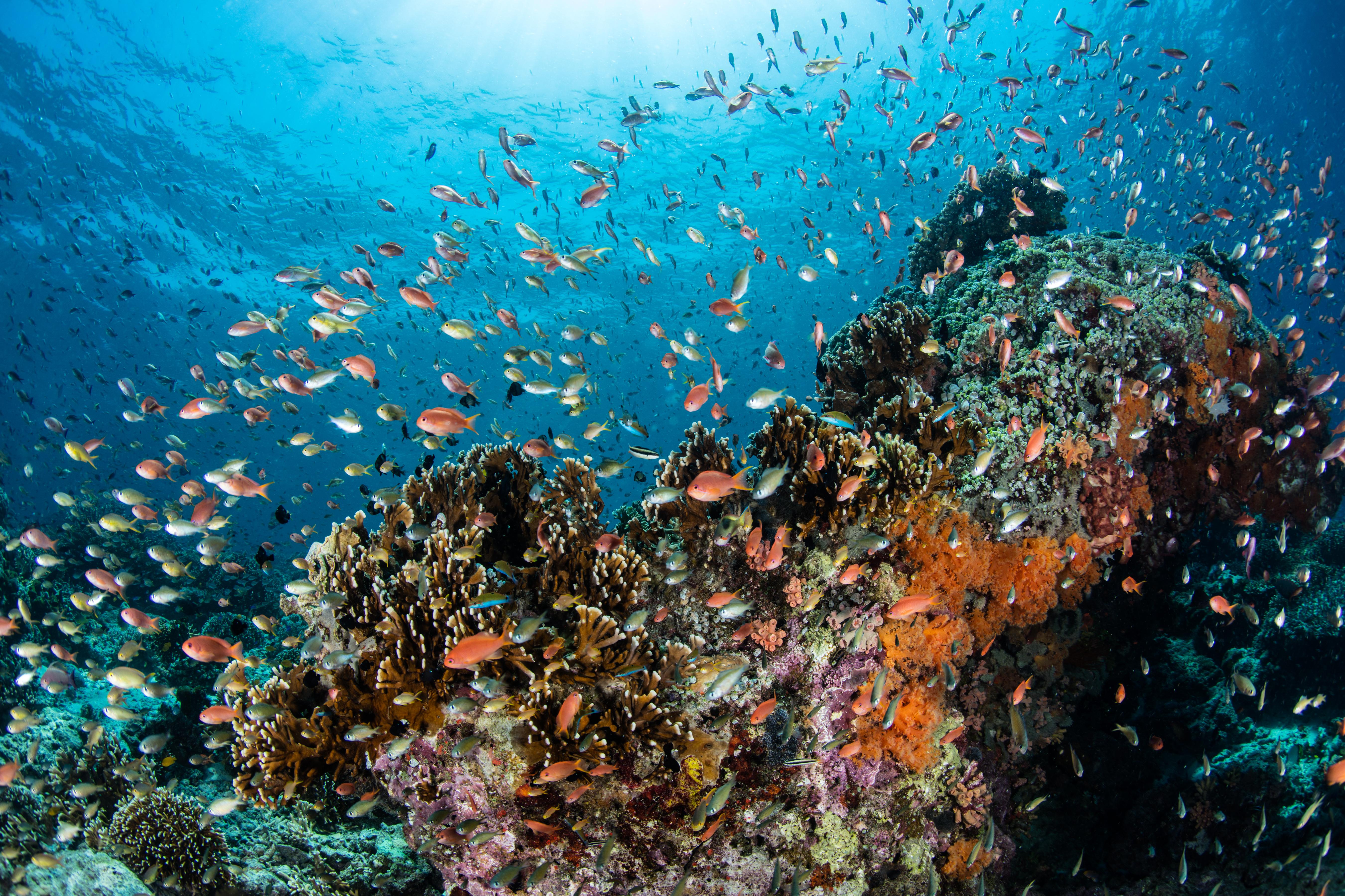 Characteristics of the Ecosystem