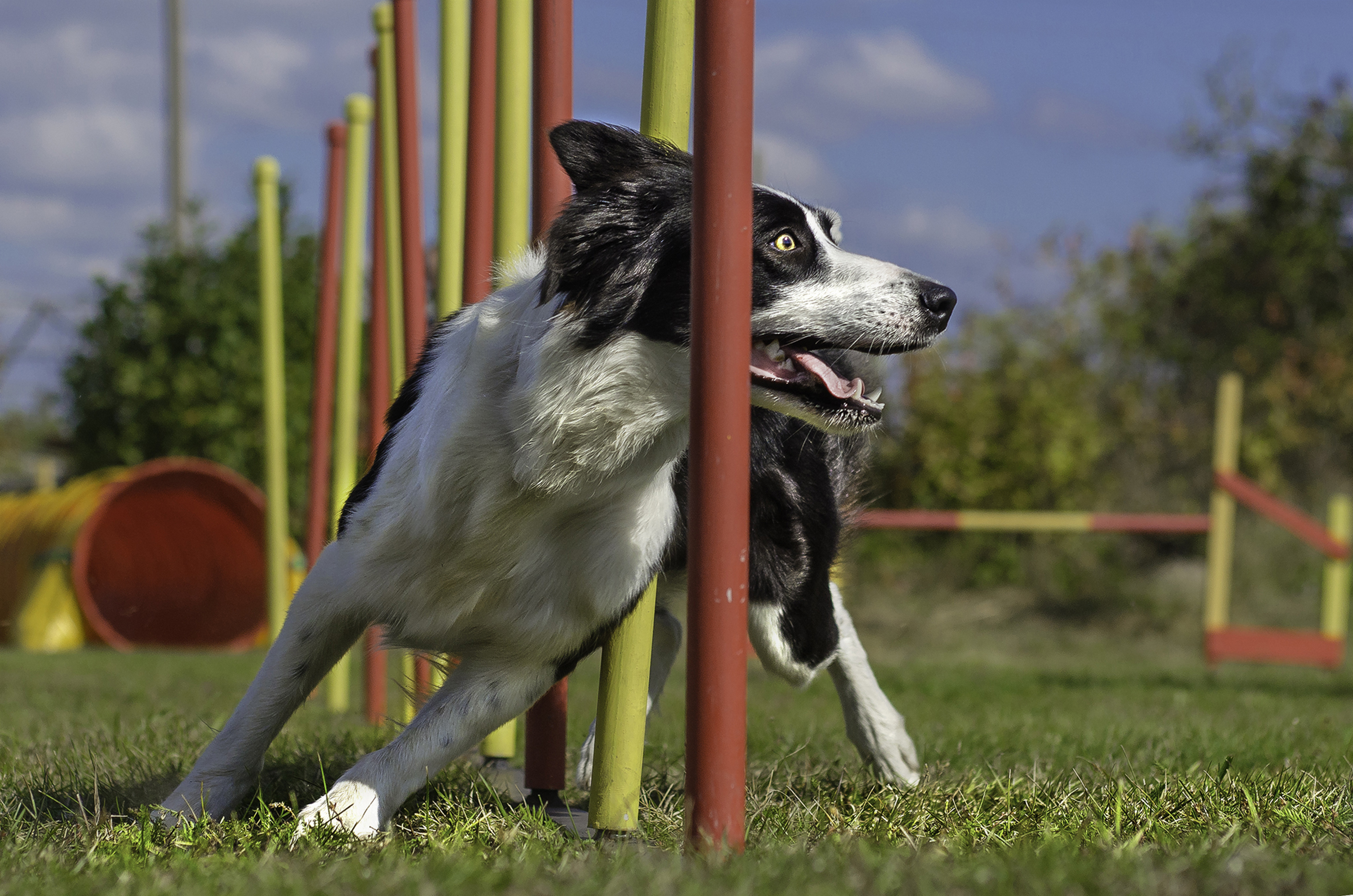 17 Best Mental Exercises For Dogs | Cuteness