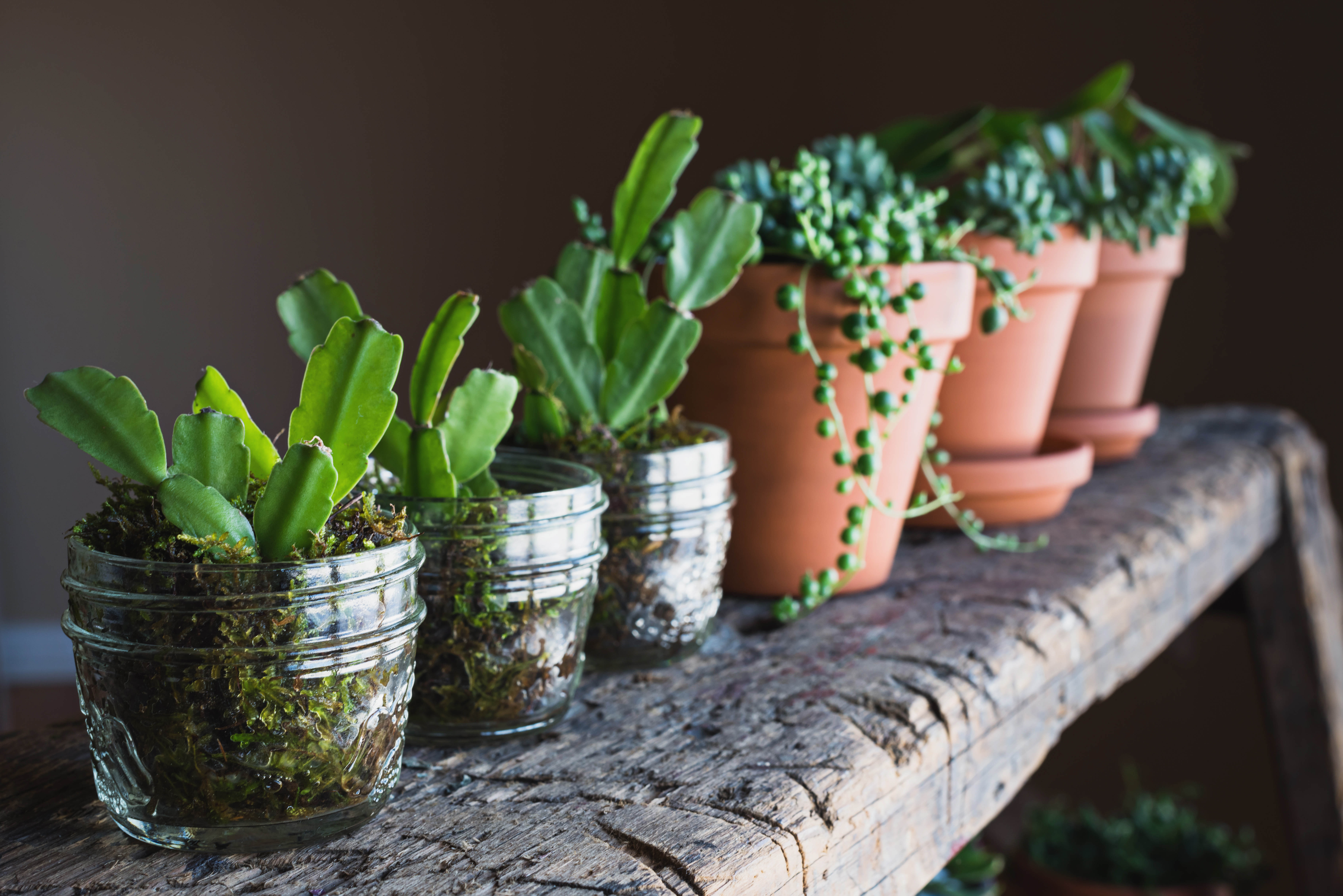 What Kind Of Soil Should I Use To Grow A Christmas Cactus