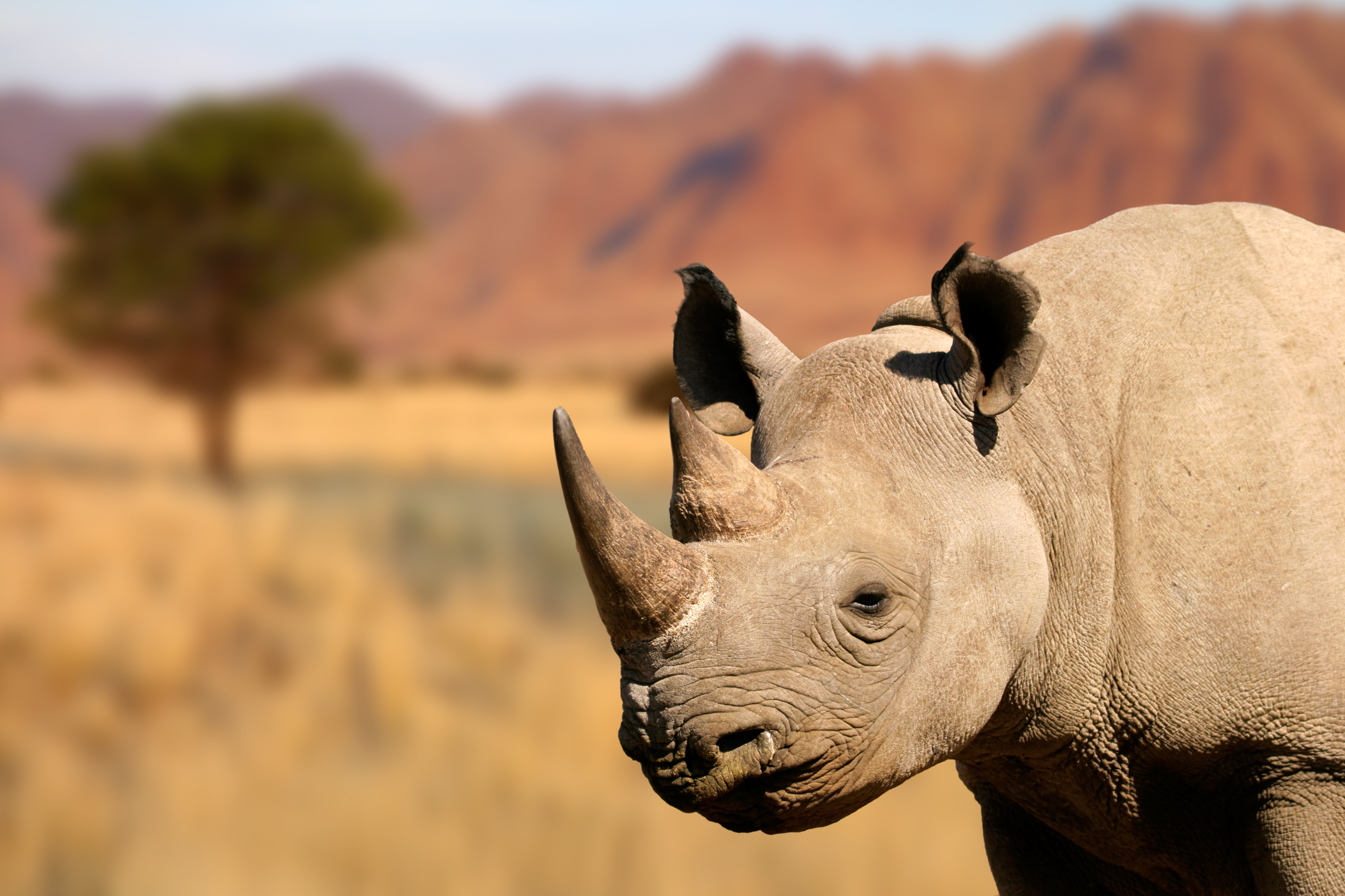 Endangered Animals In The Savanna Usa Today