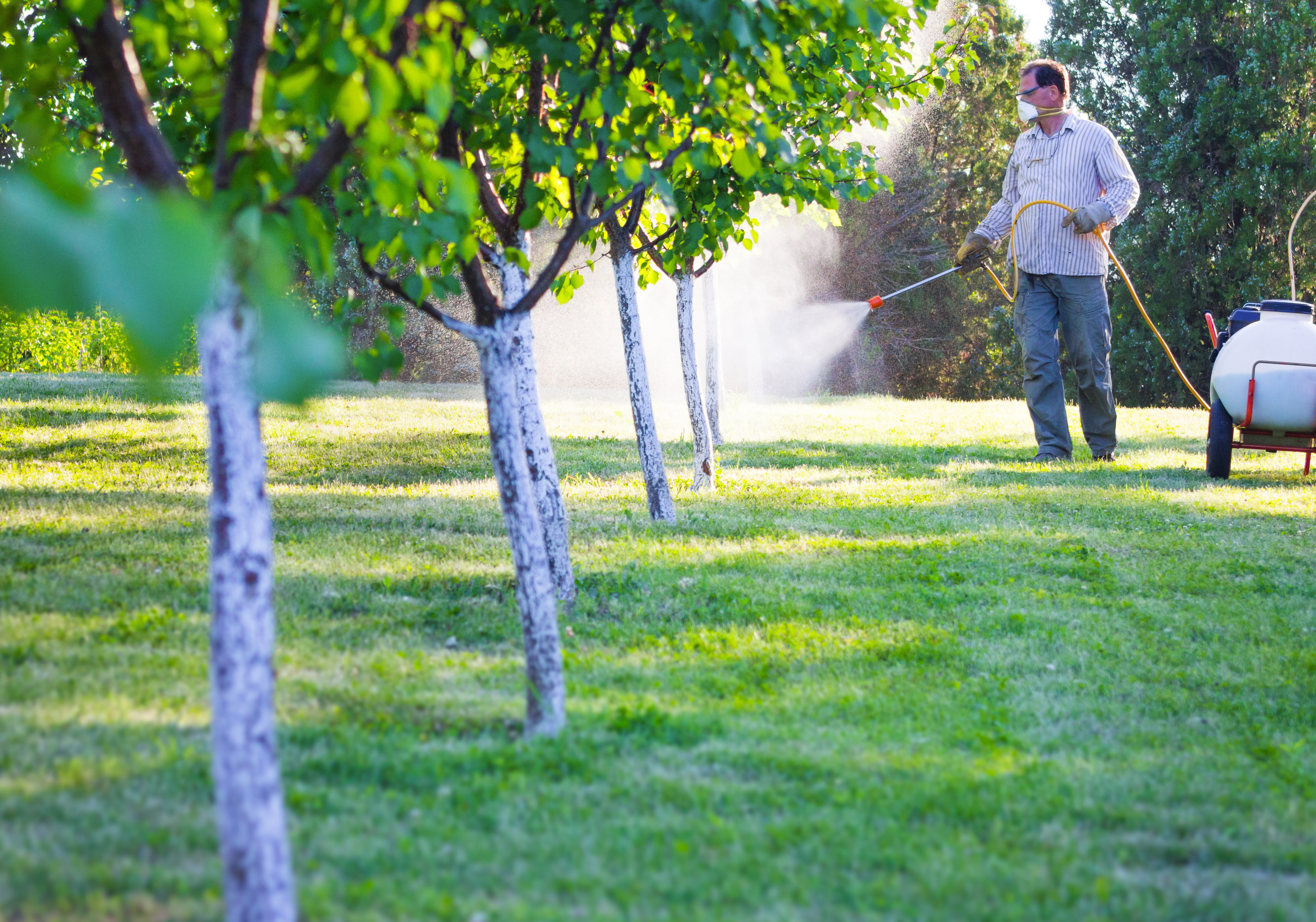 Four Methods For Applying Fertilizers | Home Guides | SF Gate