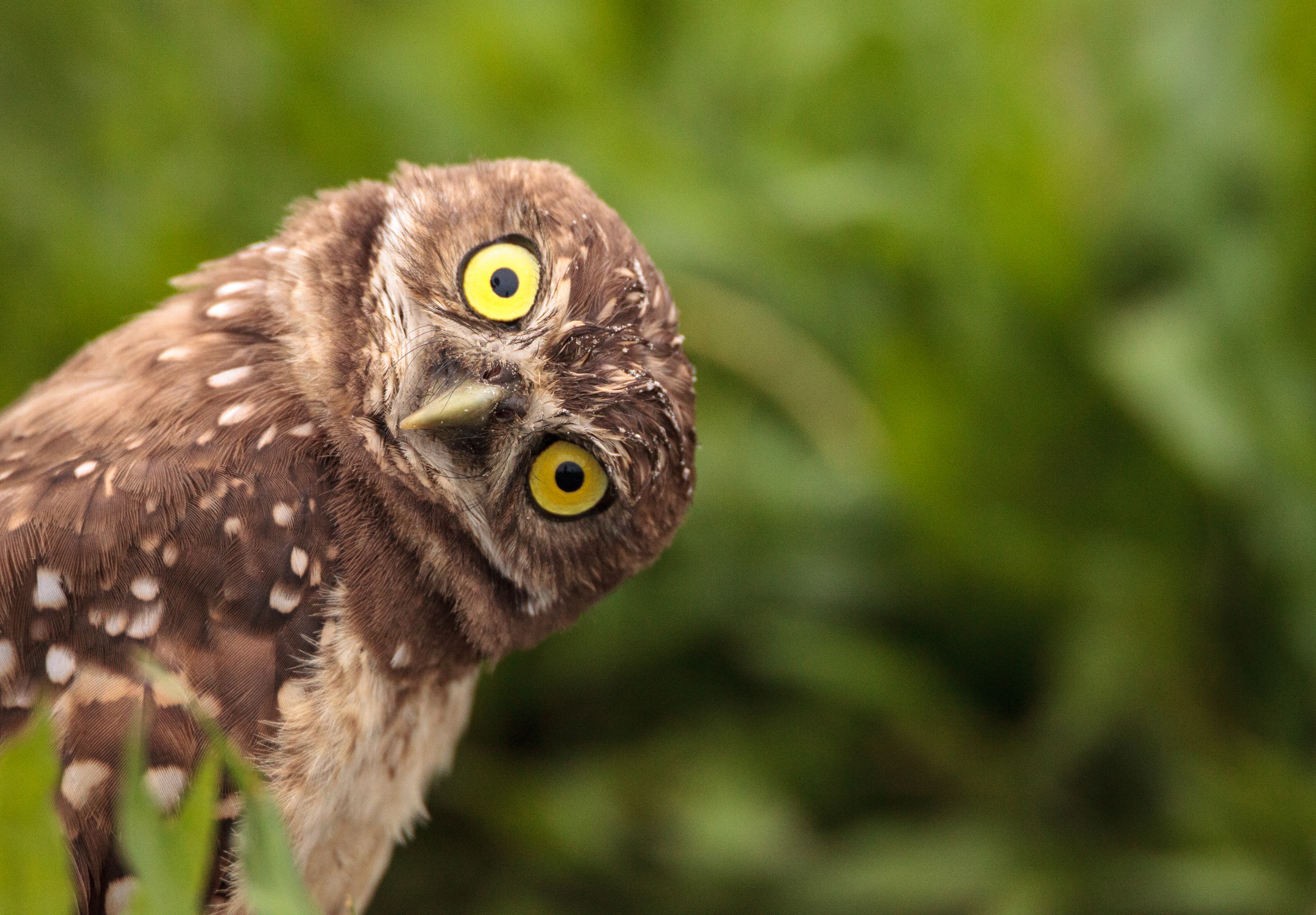 How to Make an Owl Leave Your Yard | Home Guides | SF Gate