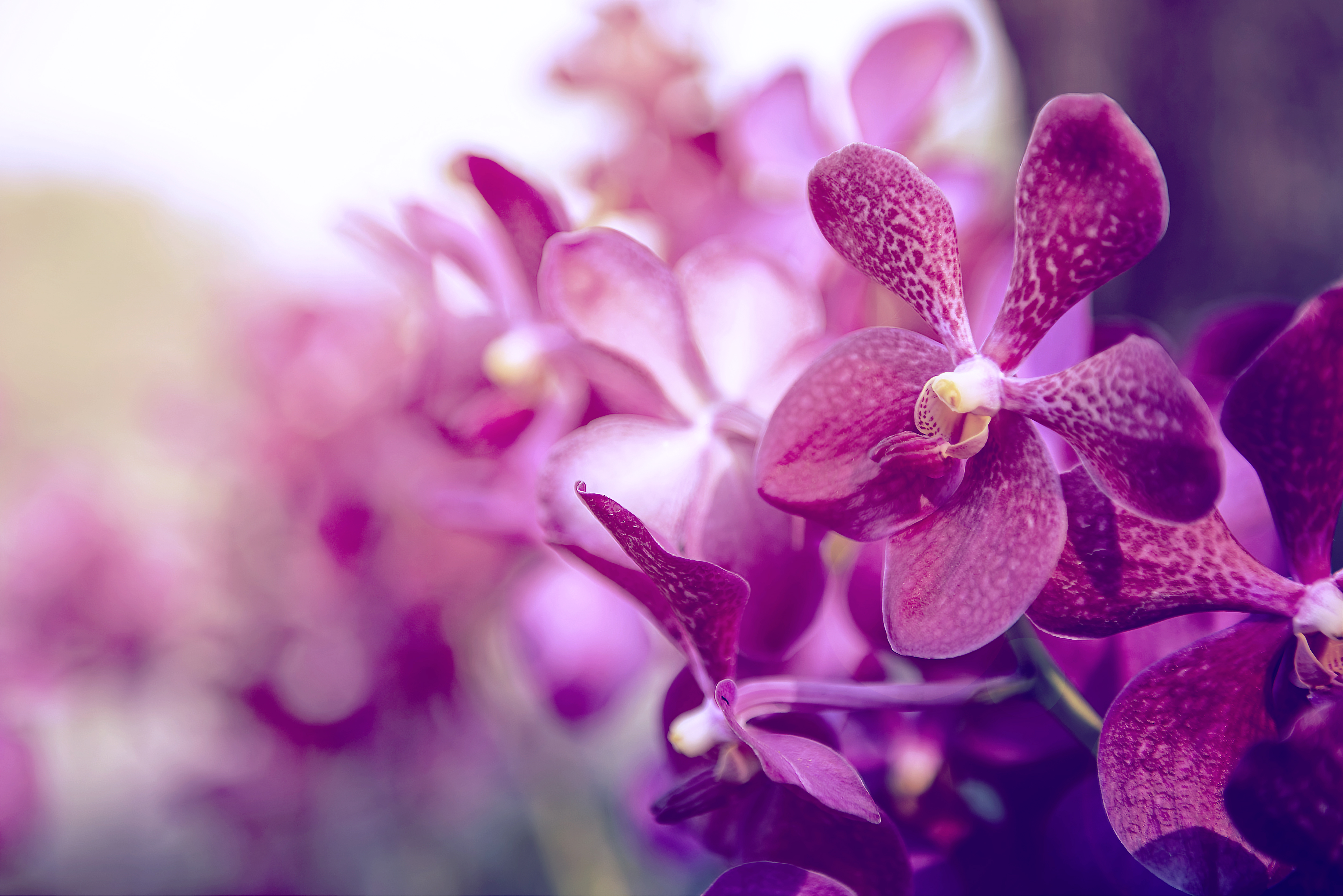 My Orchid Is Wilted: What Do I Do? | Home Guides | SF Gate