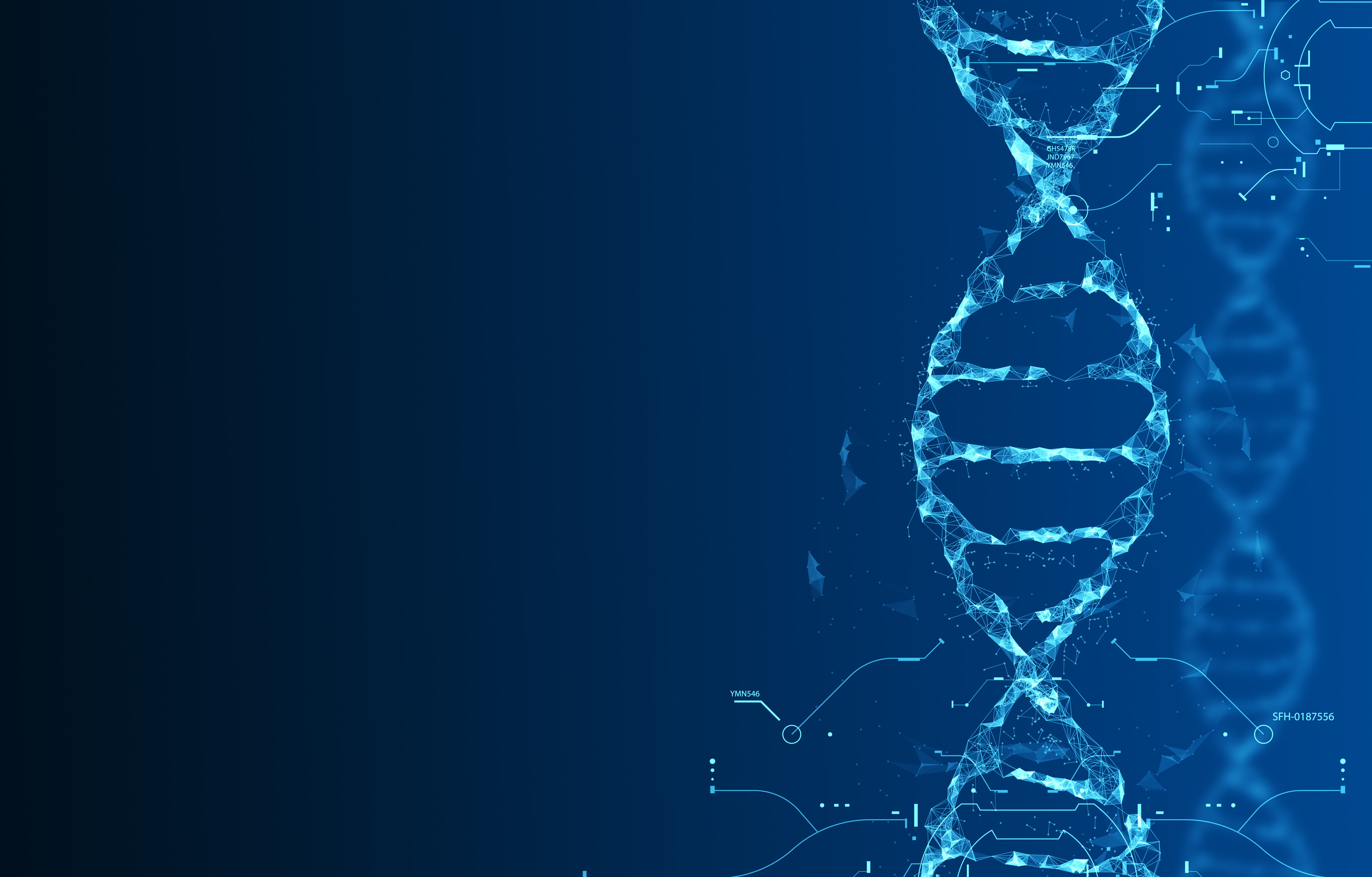 The Role of Taq Polymerase in PCR