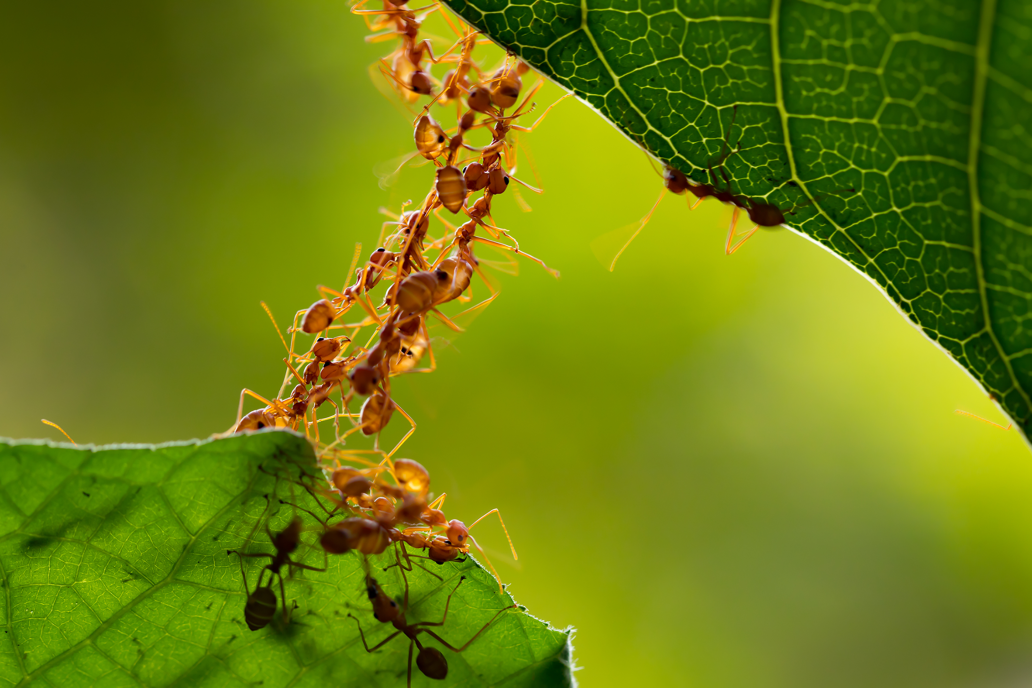 Homemade Pesticides to Get Rid of Ants | Home Guides | SF Gate