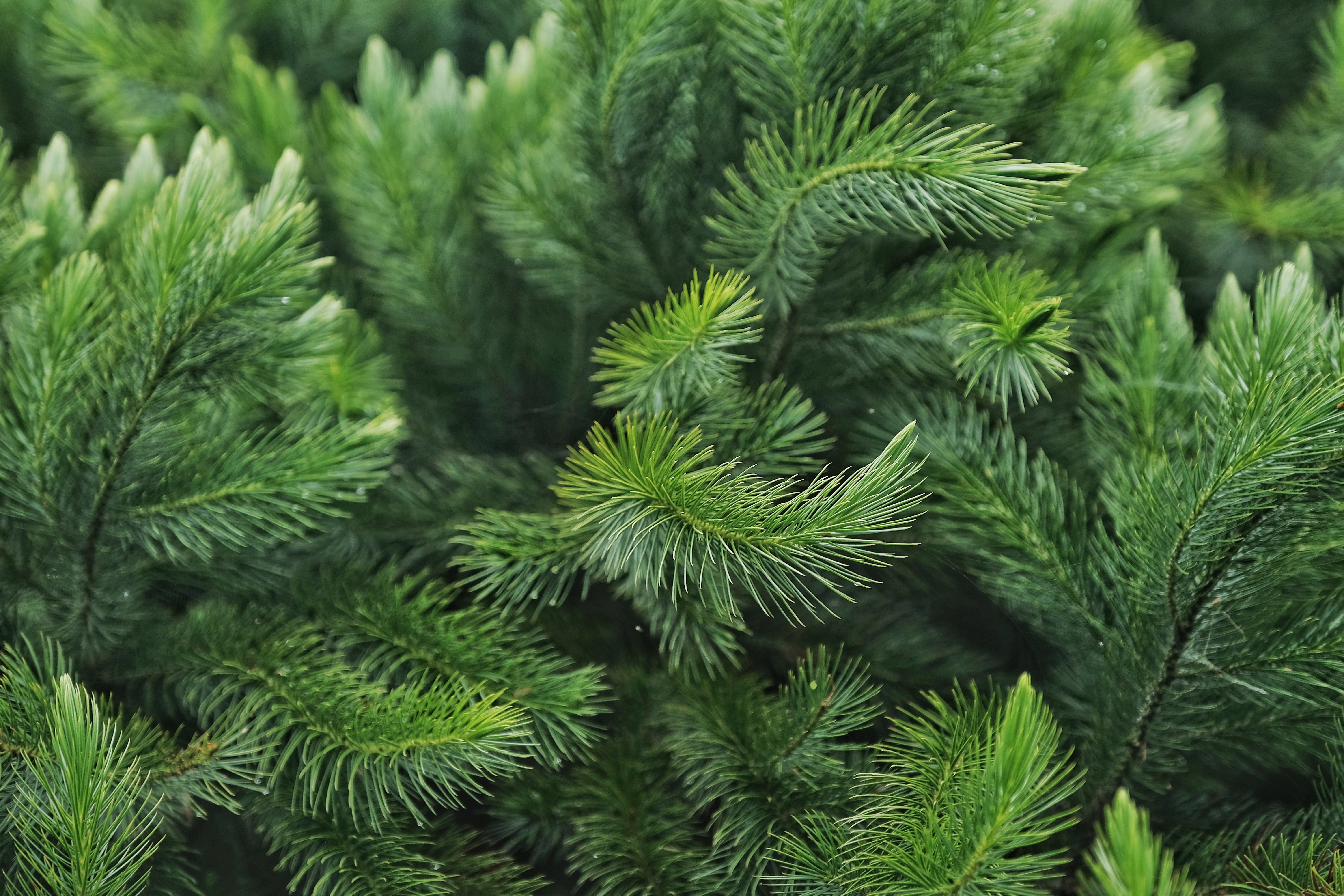 How to Get Pine Tree Sap Out of Fabric   Home Guides   SF Gate