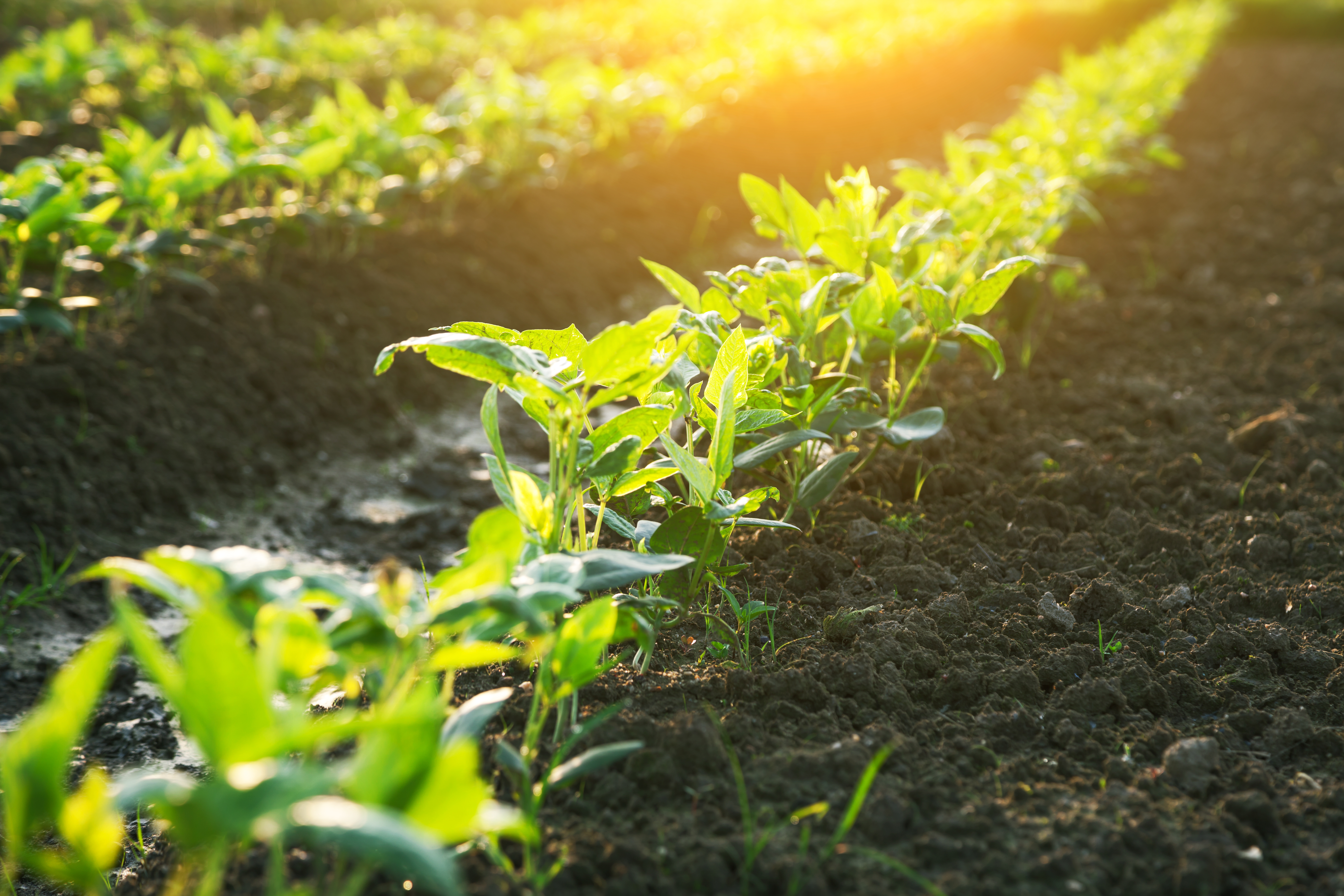 Difference Between Garden Soil and Top Soil | Home Guides