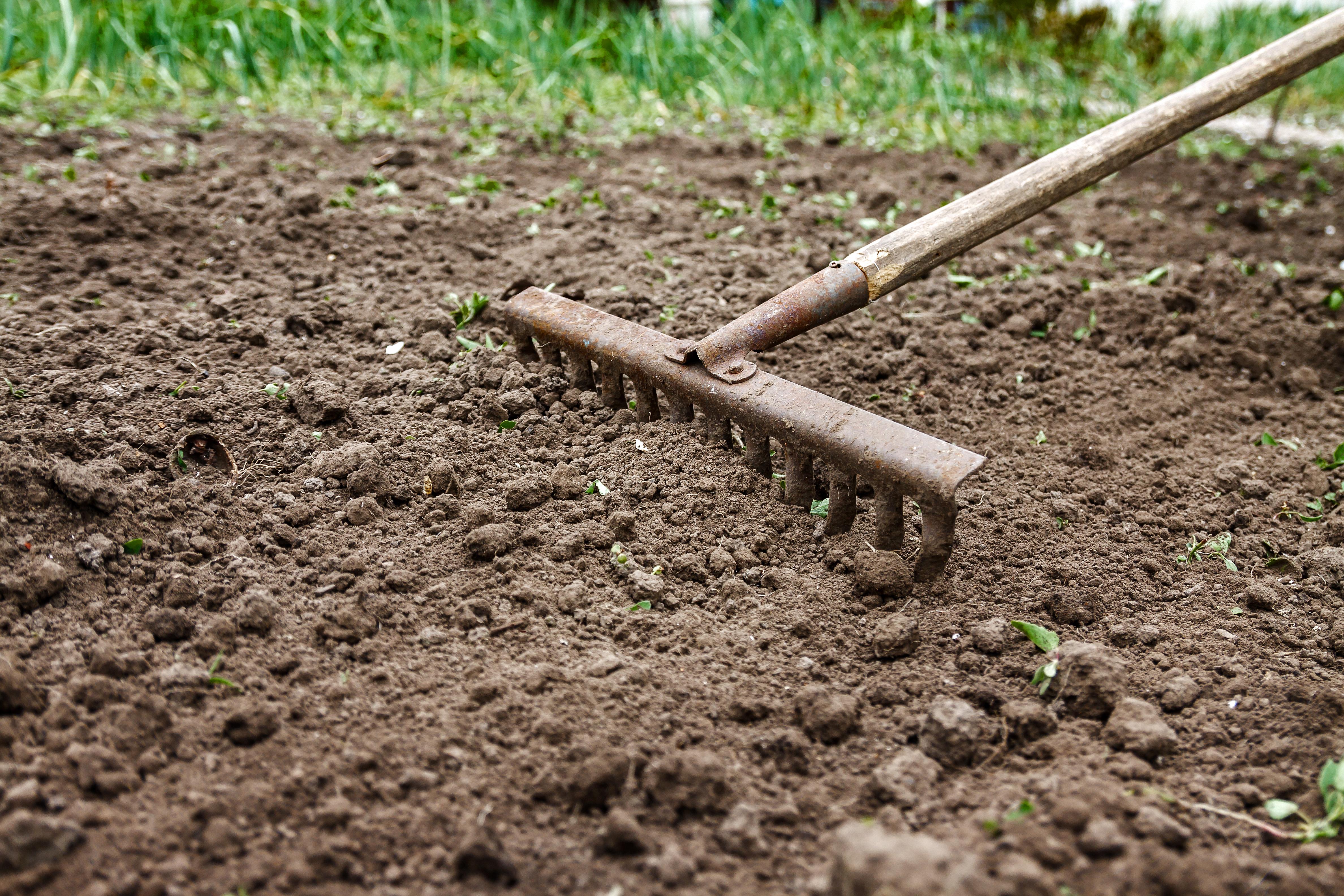 How to Eliminate White Fungus From Garden Soil