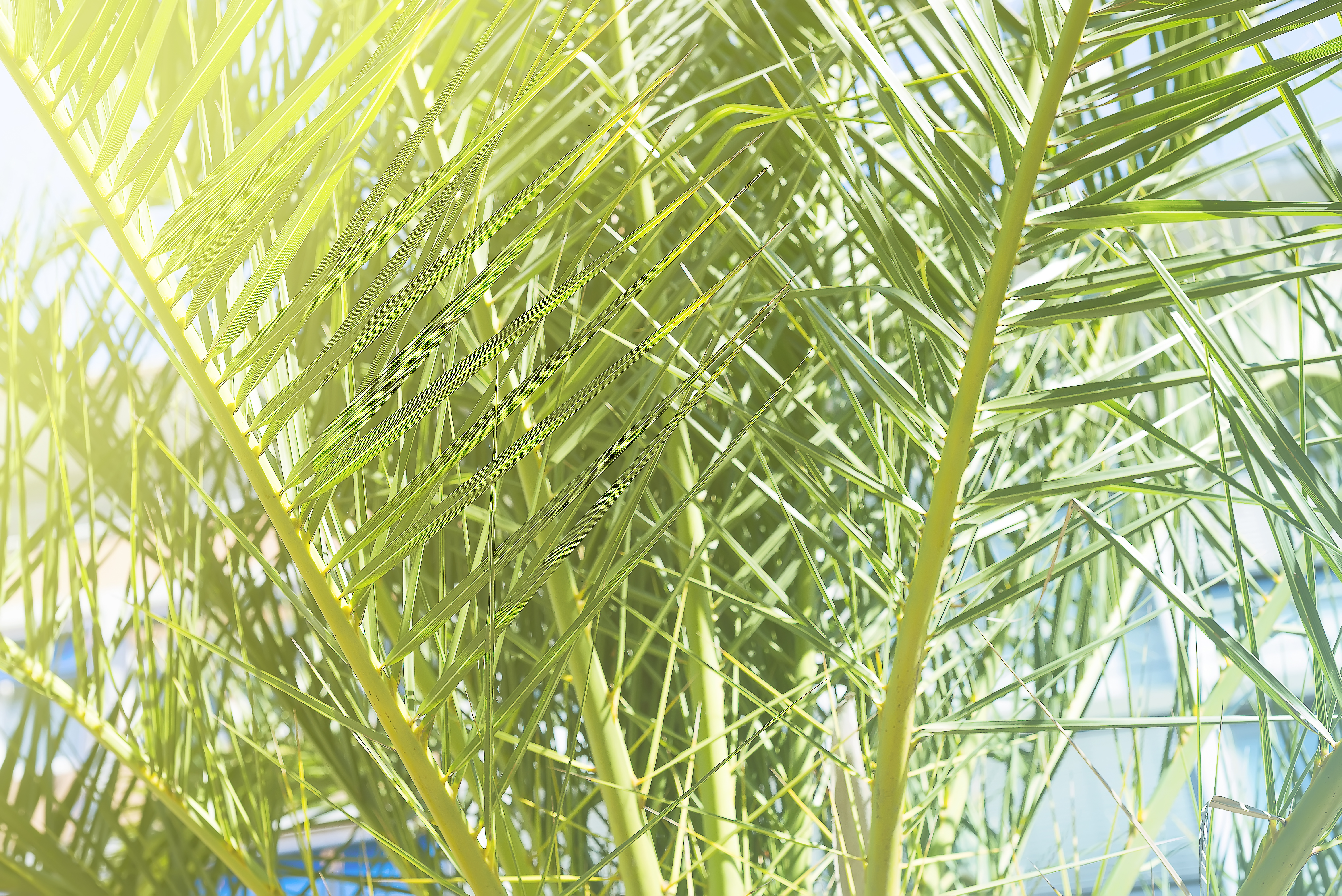 Note To Fox News This Is Not Palm Tree >> What Palms Do Best In Containers Home Guides Sf Gate