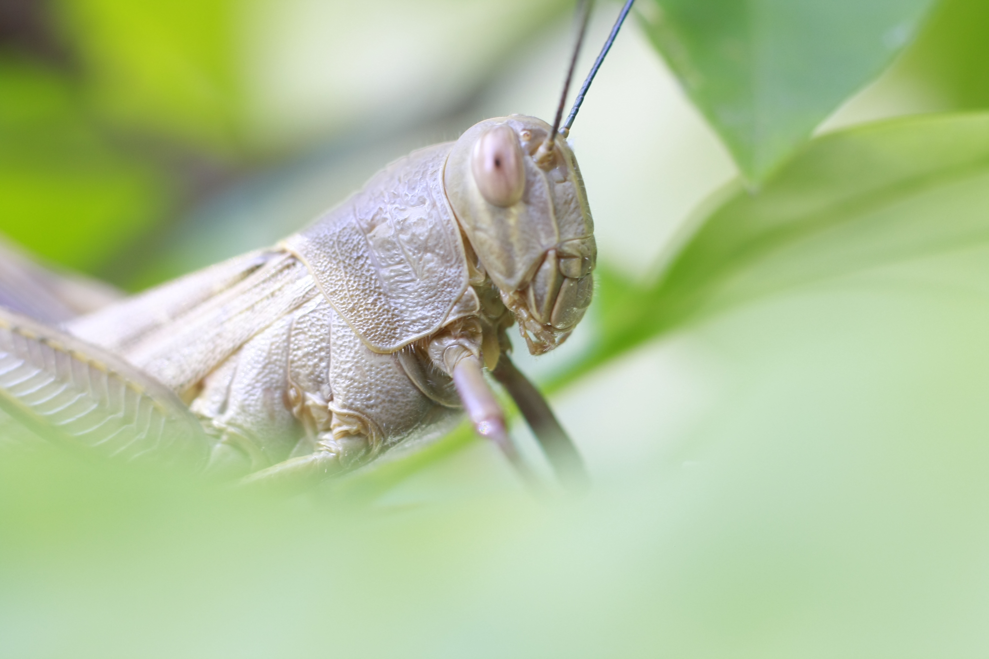How to Tell a Cricket From a Grasshopper