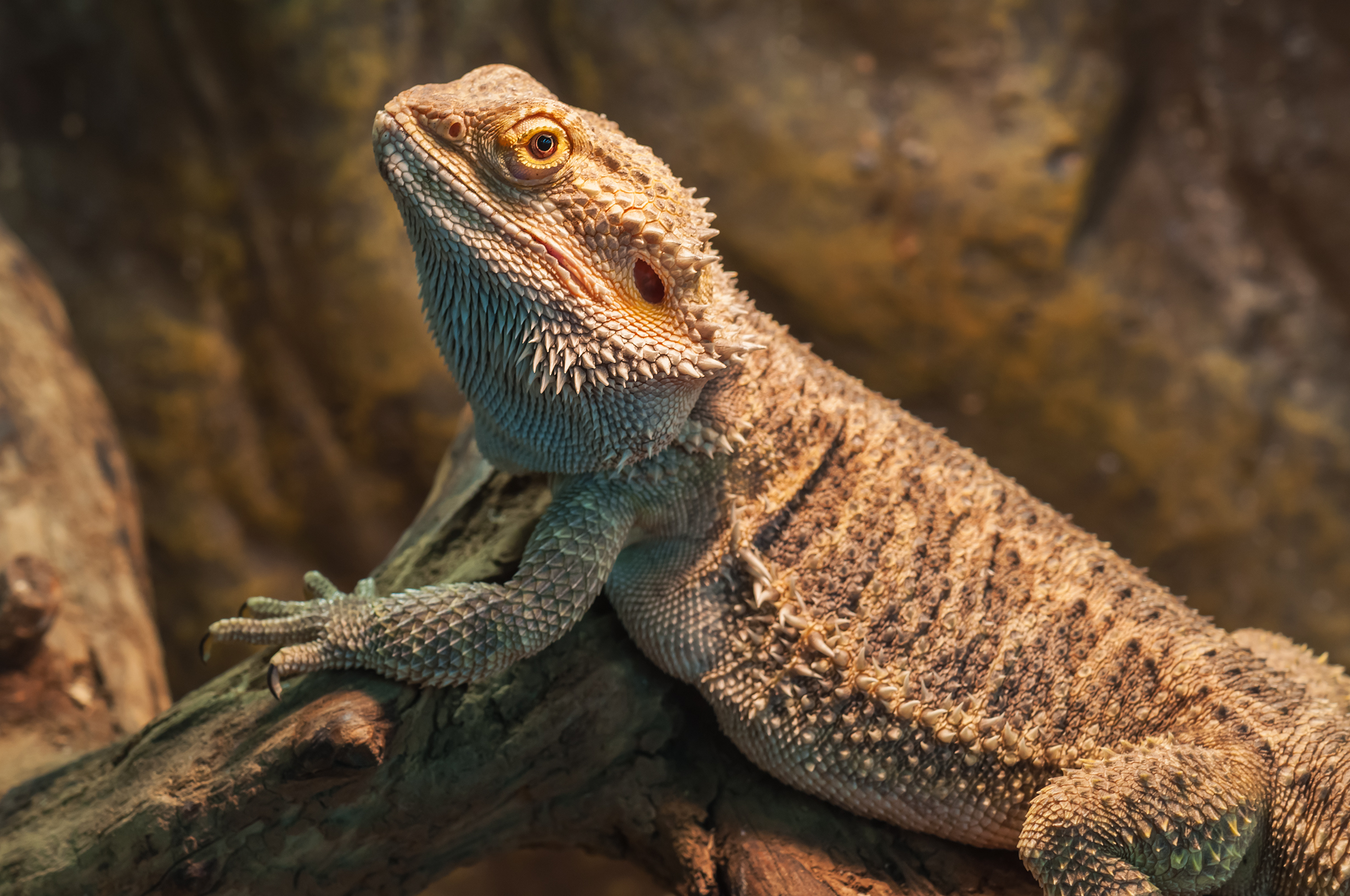 What Are the Adaptations a Lizard Has That Allow It to Live