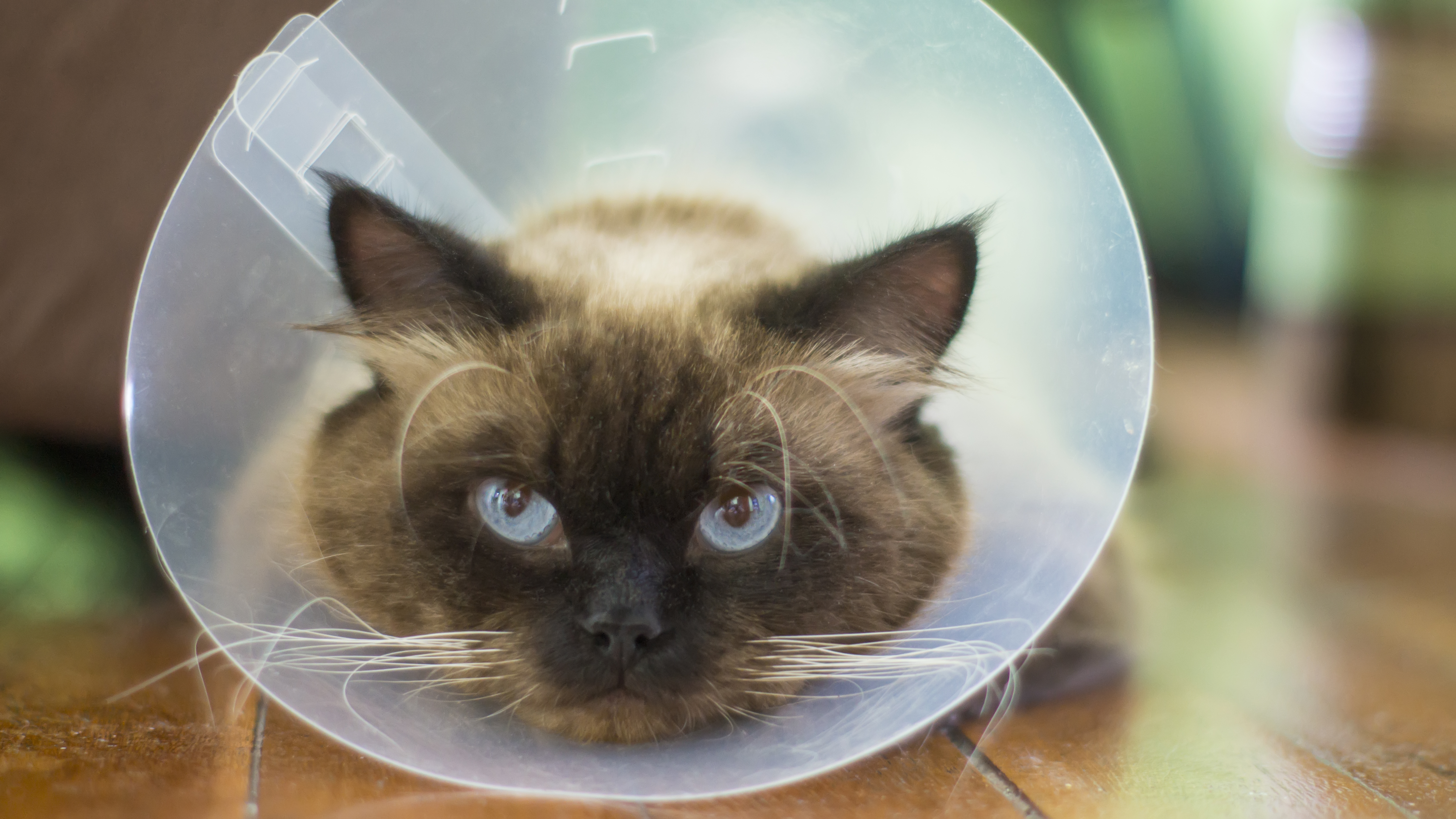 How to Feed a Cat Who is Wearing a Cone Around Its Head | Cuteness