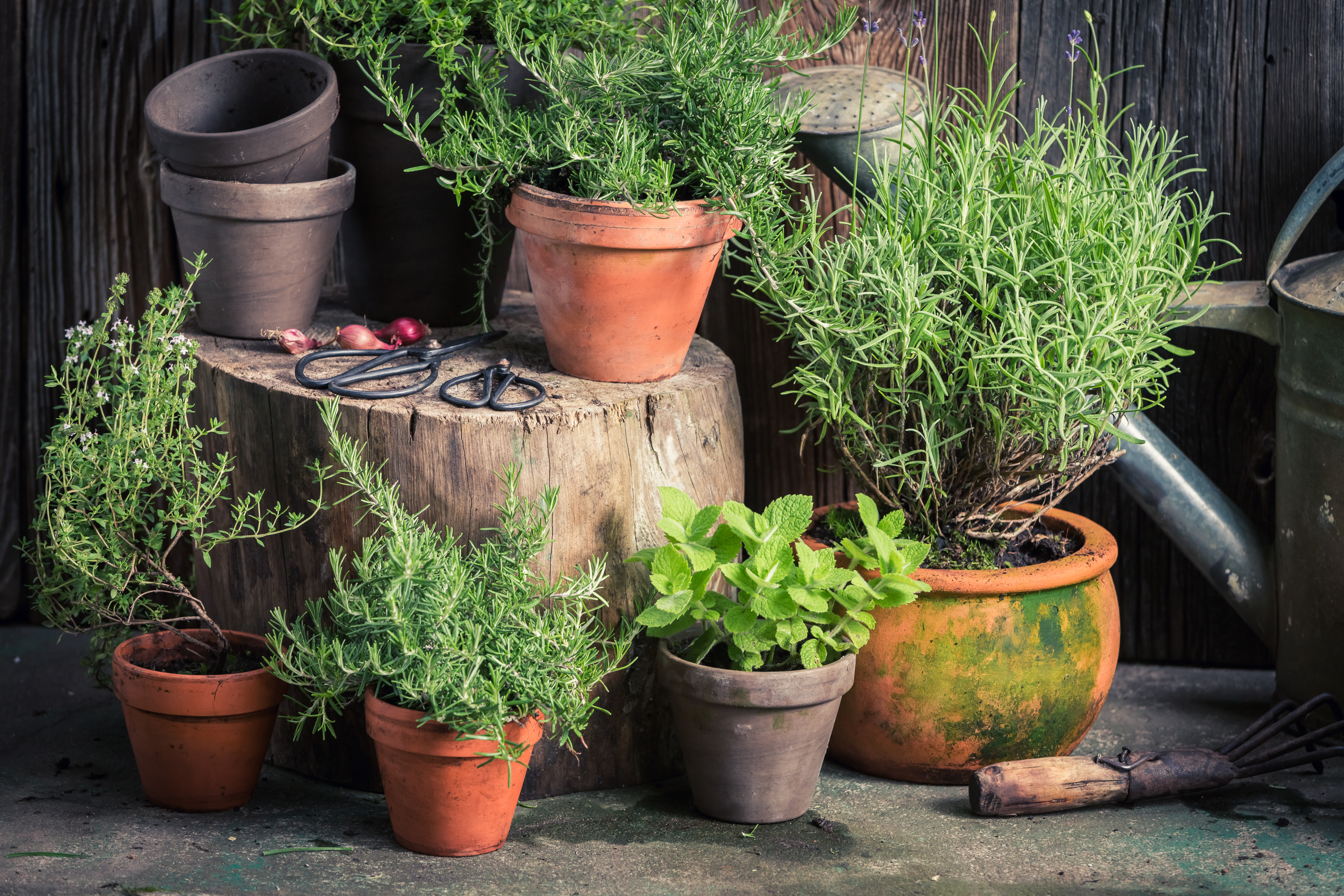 What Is The Best Mix Of Herbs To Grow Together In A Pot Home