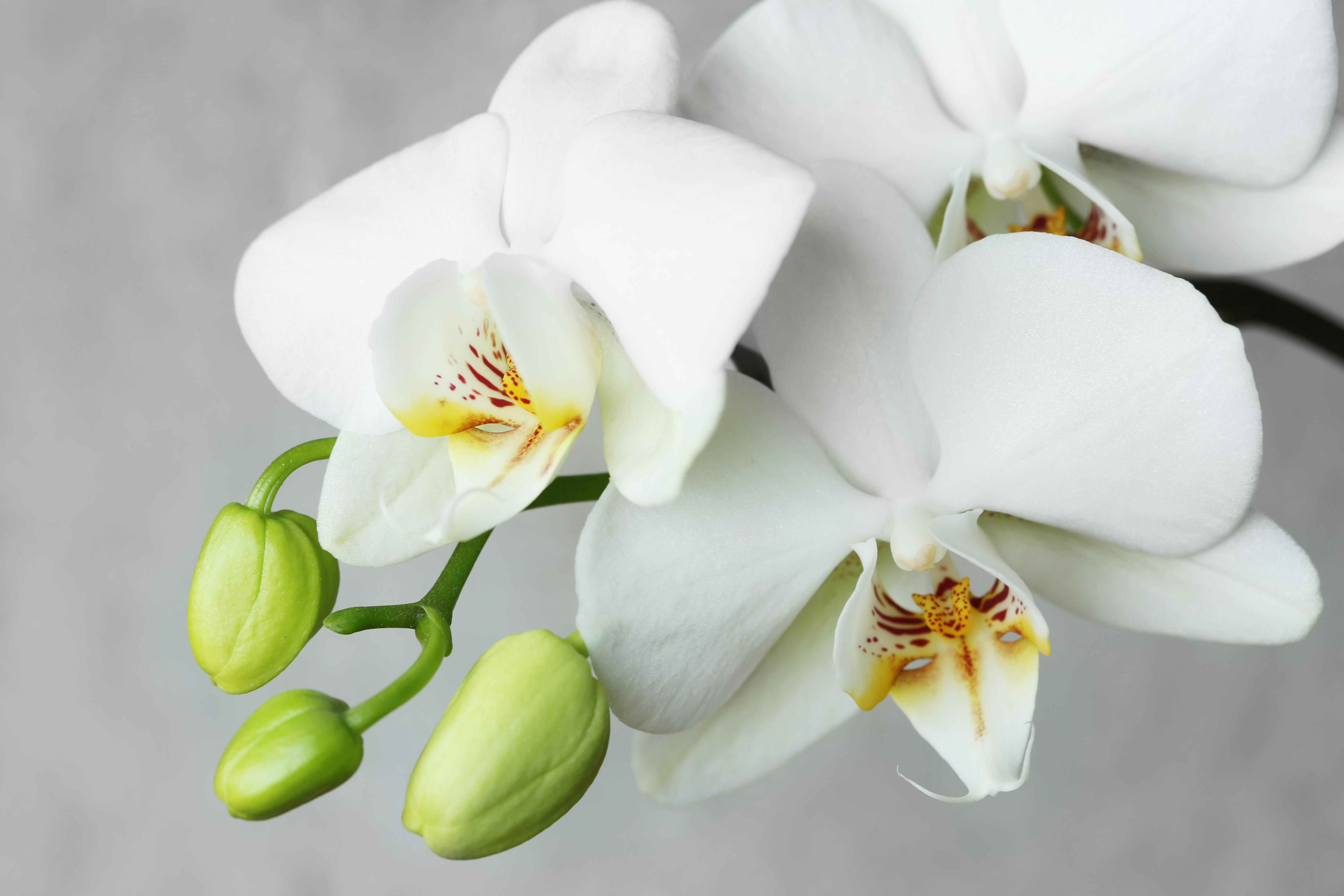 How To Nurse A Dying Orchid Home Guides Sf Gate