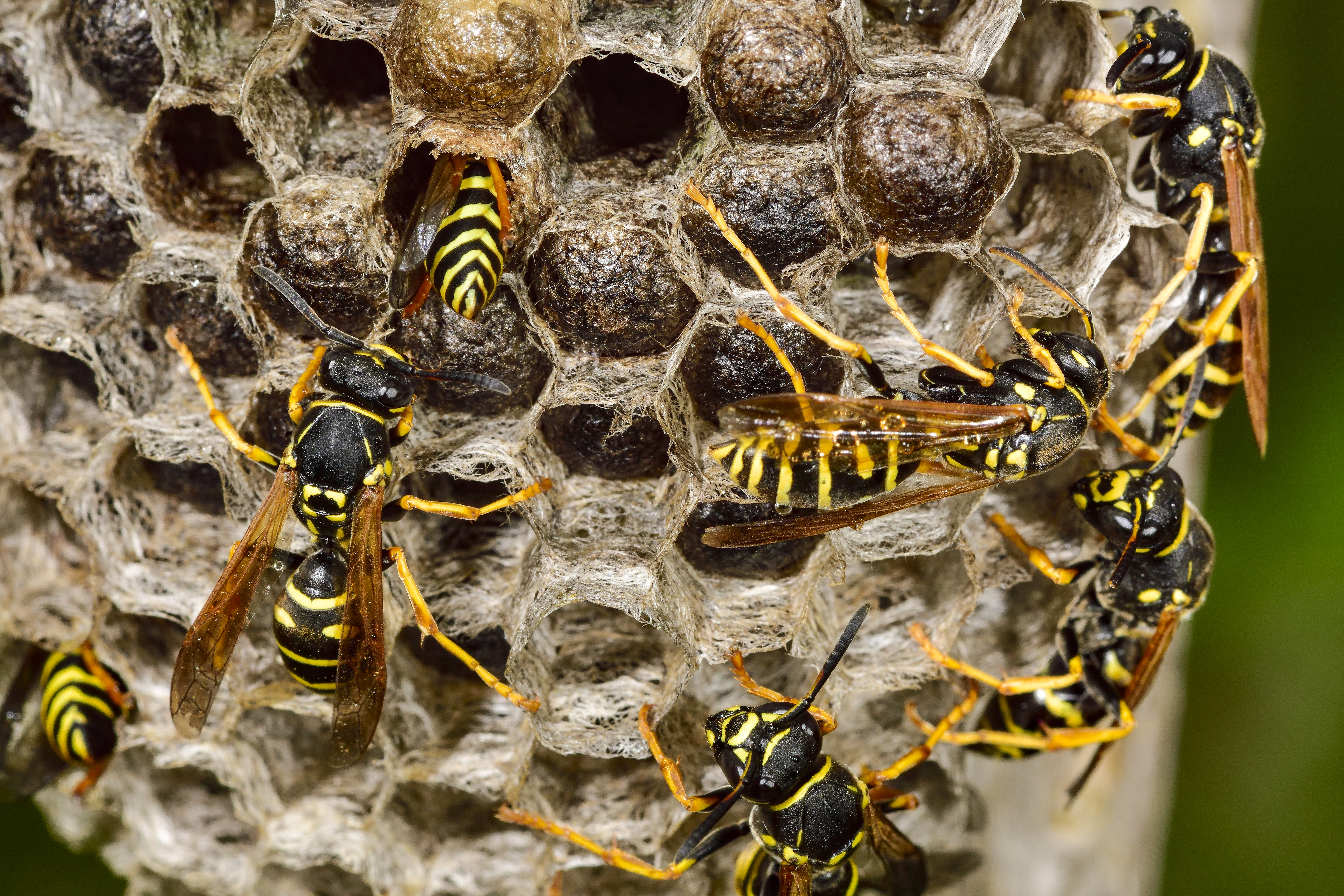 How To Get Rid Of Wasps   Hunker