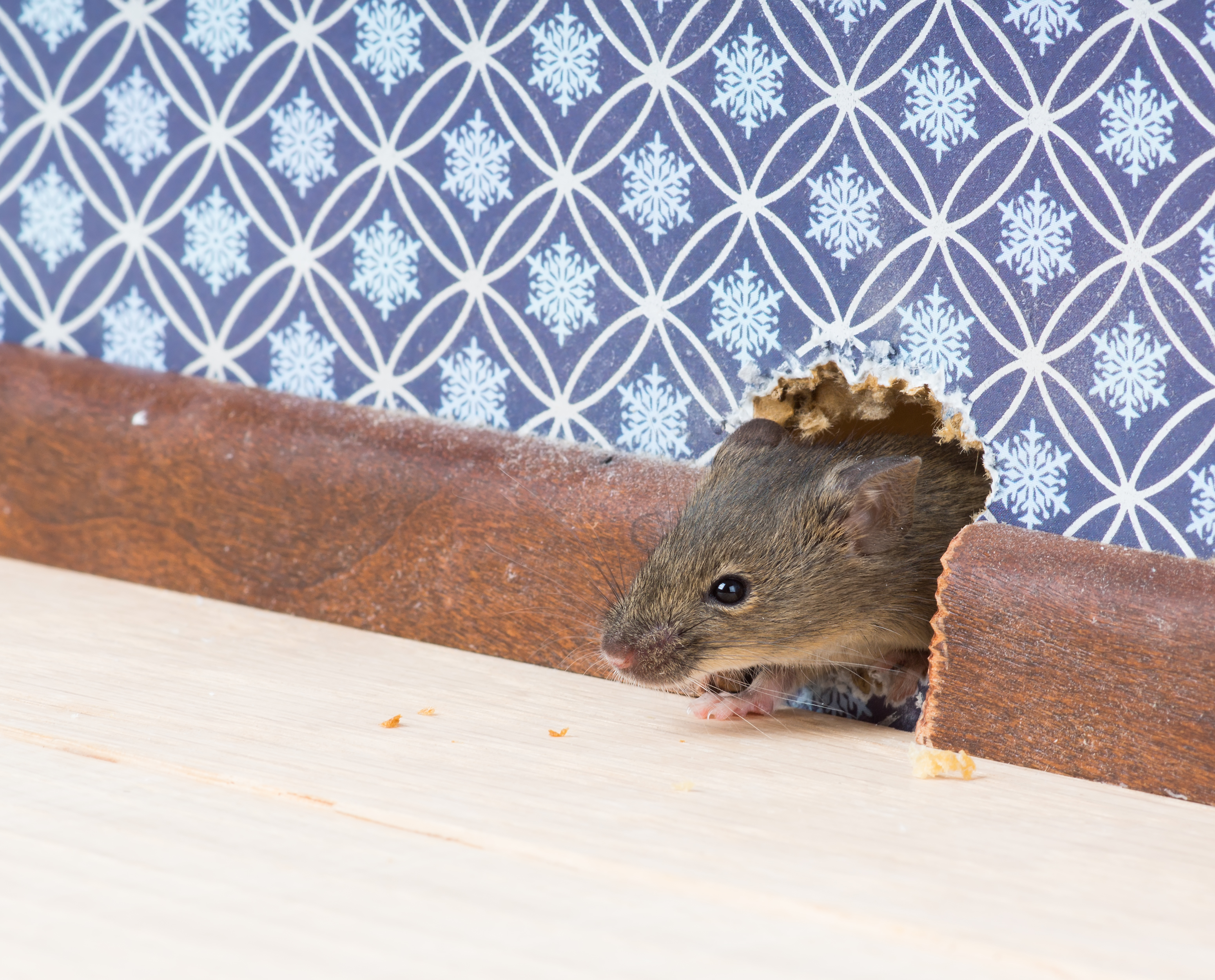 How to Get Rid of Mice in the Ceiling | Home Guides | SF Gate