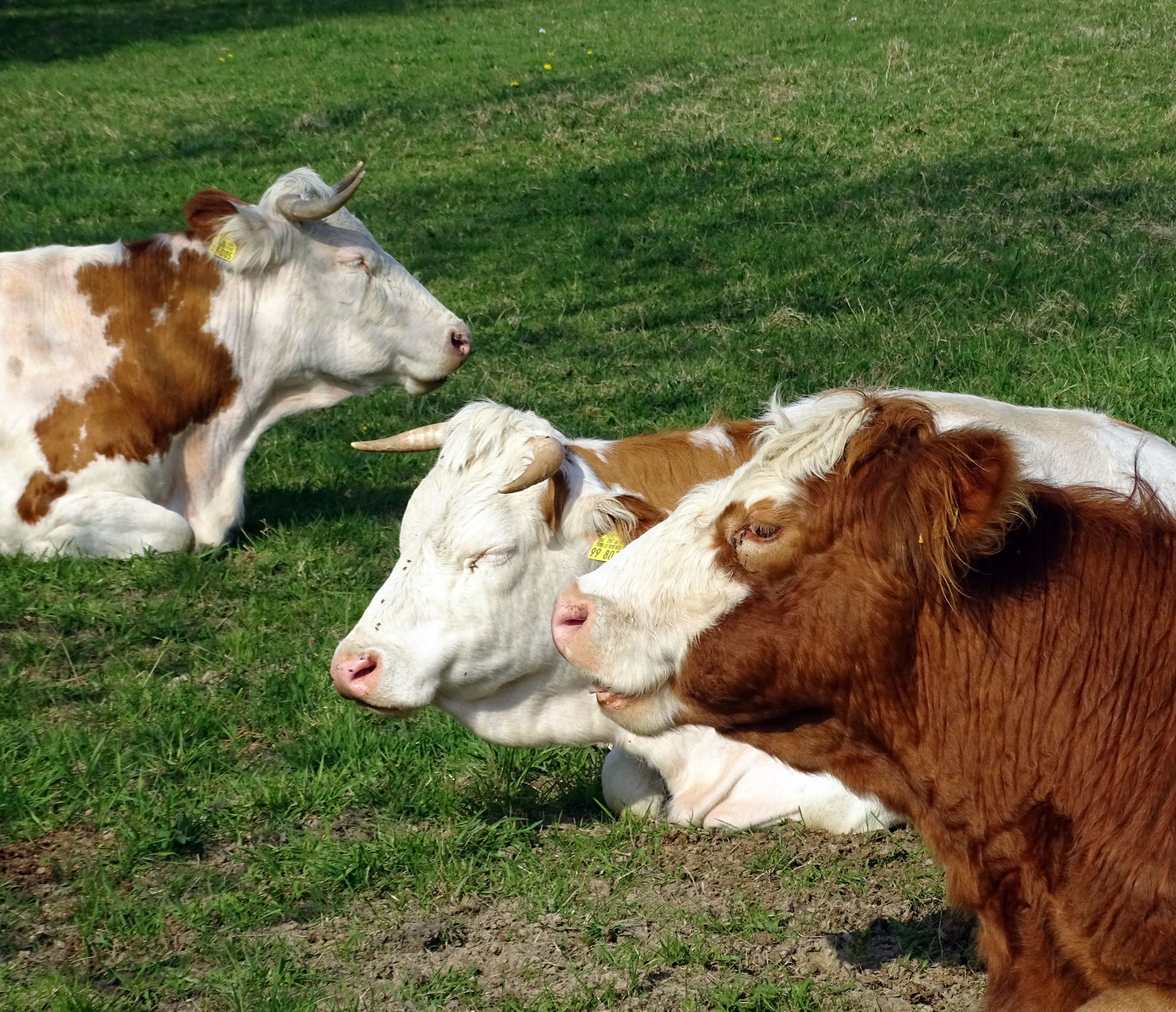 How to Make Money Buying & Selling Cattle | Bizfluent