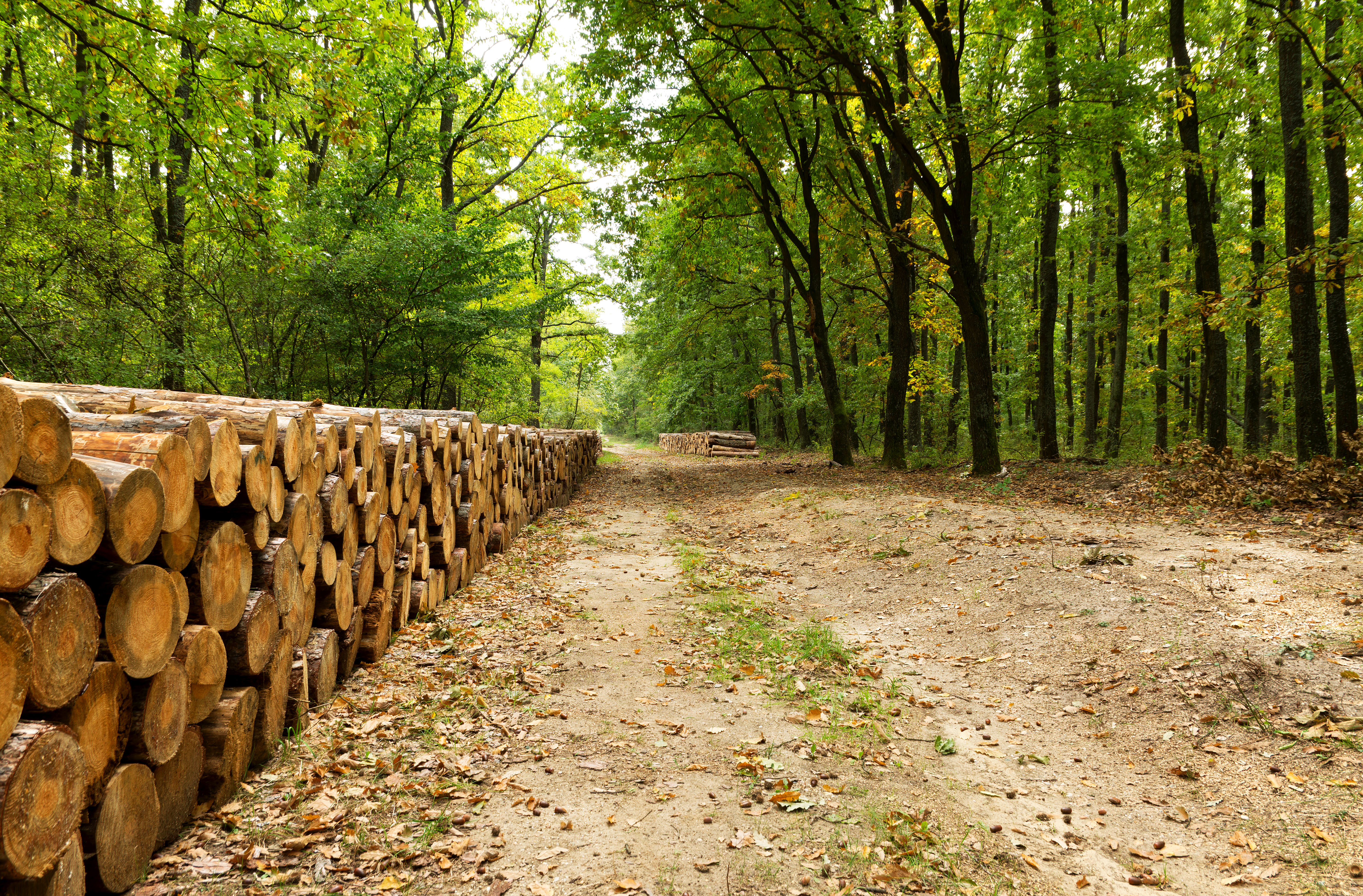 How to Anchor Landscape Lumber | Home Guides | SF Gate