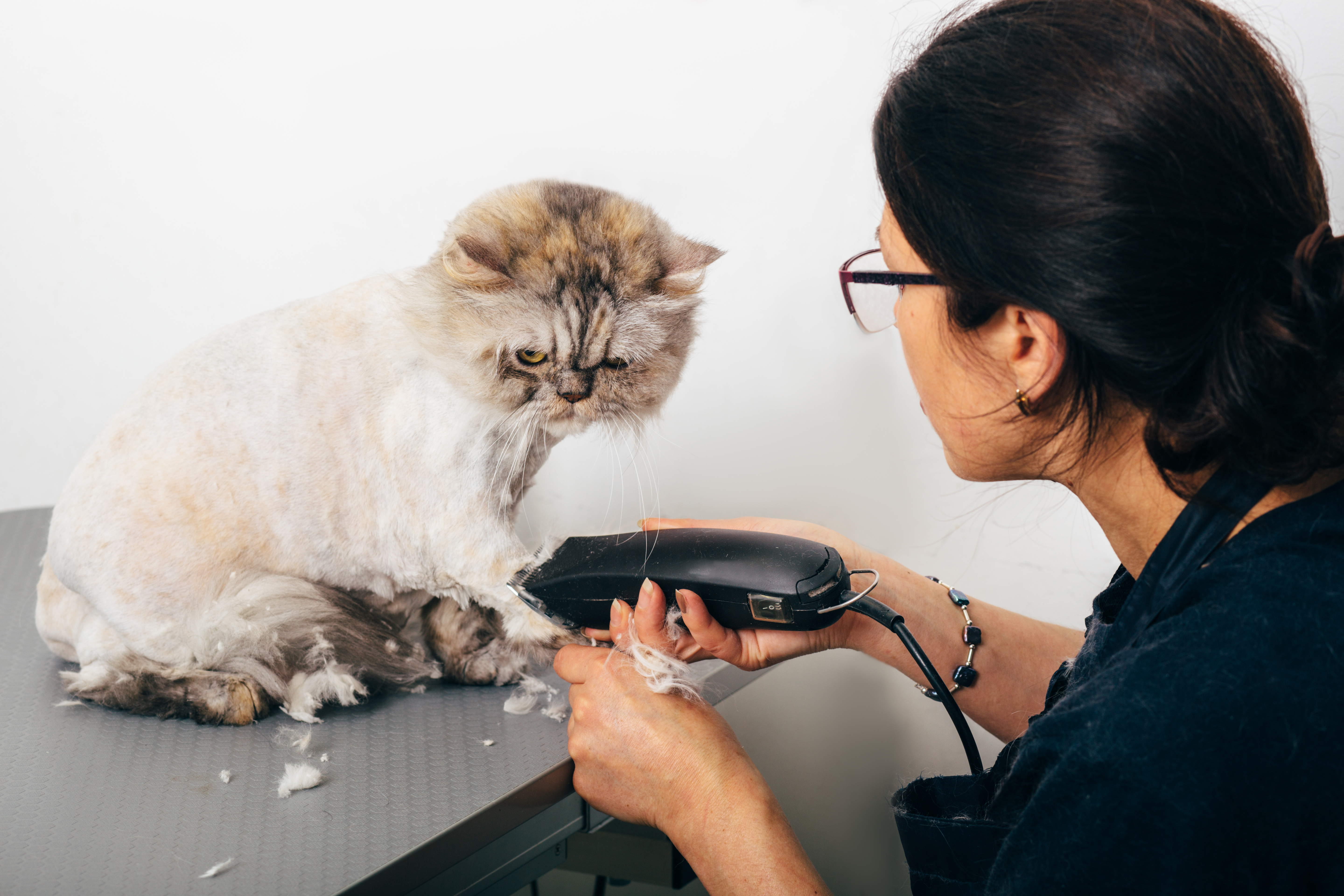 How to Sedate a Cat for Grooming | Cuteness