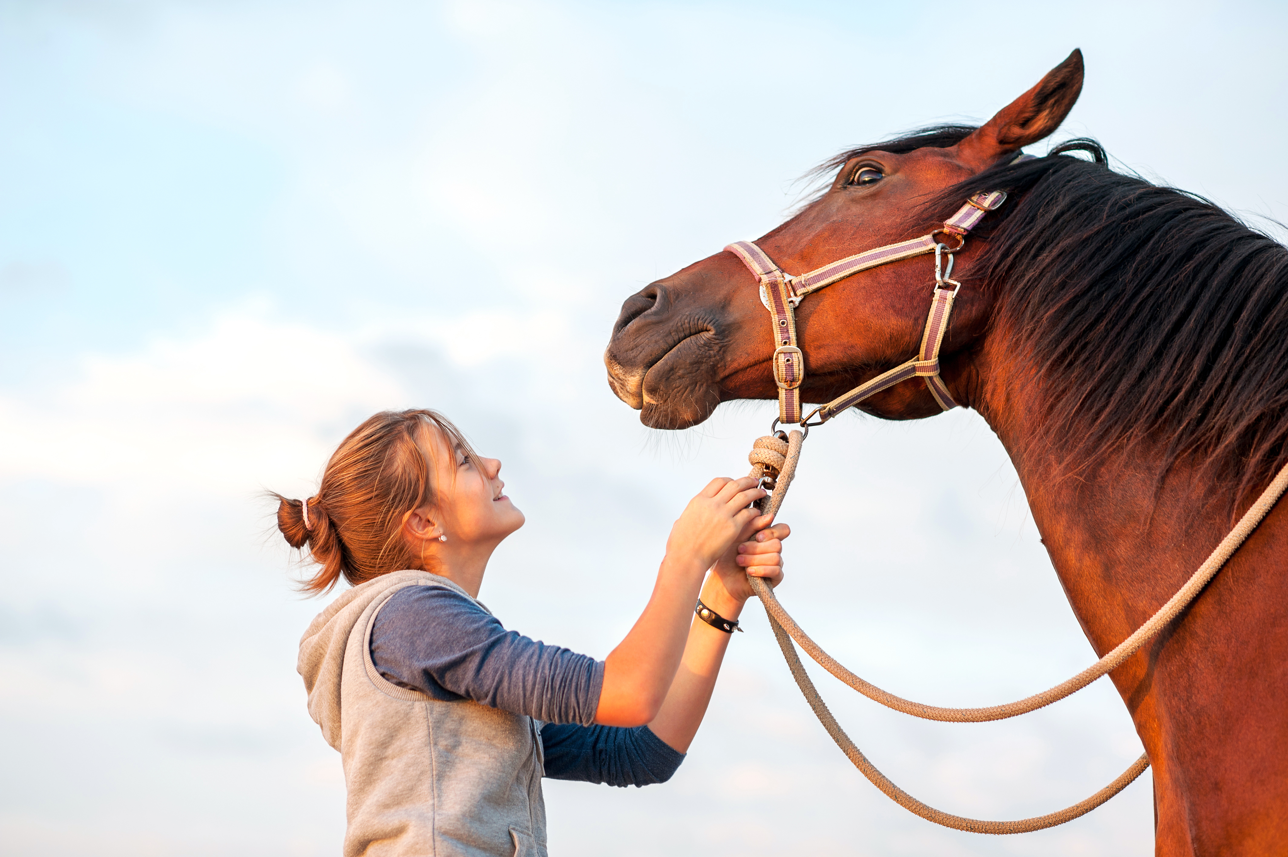 How to Use Horse Liniment for People | LEAFtv