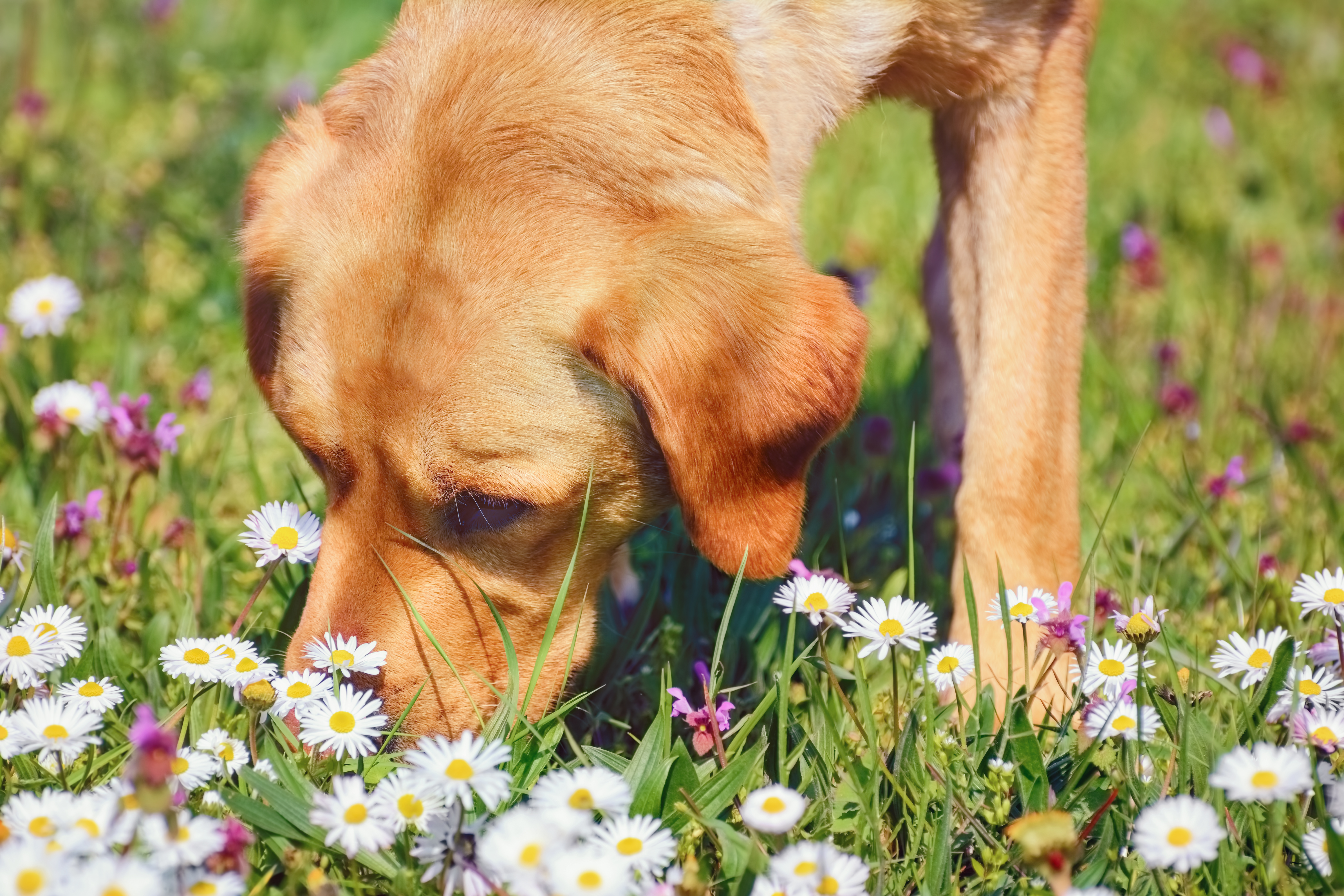 Herbs or Flowers That Repel Dogs   Cuteness
