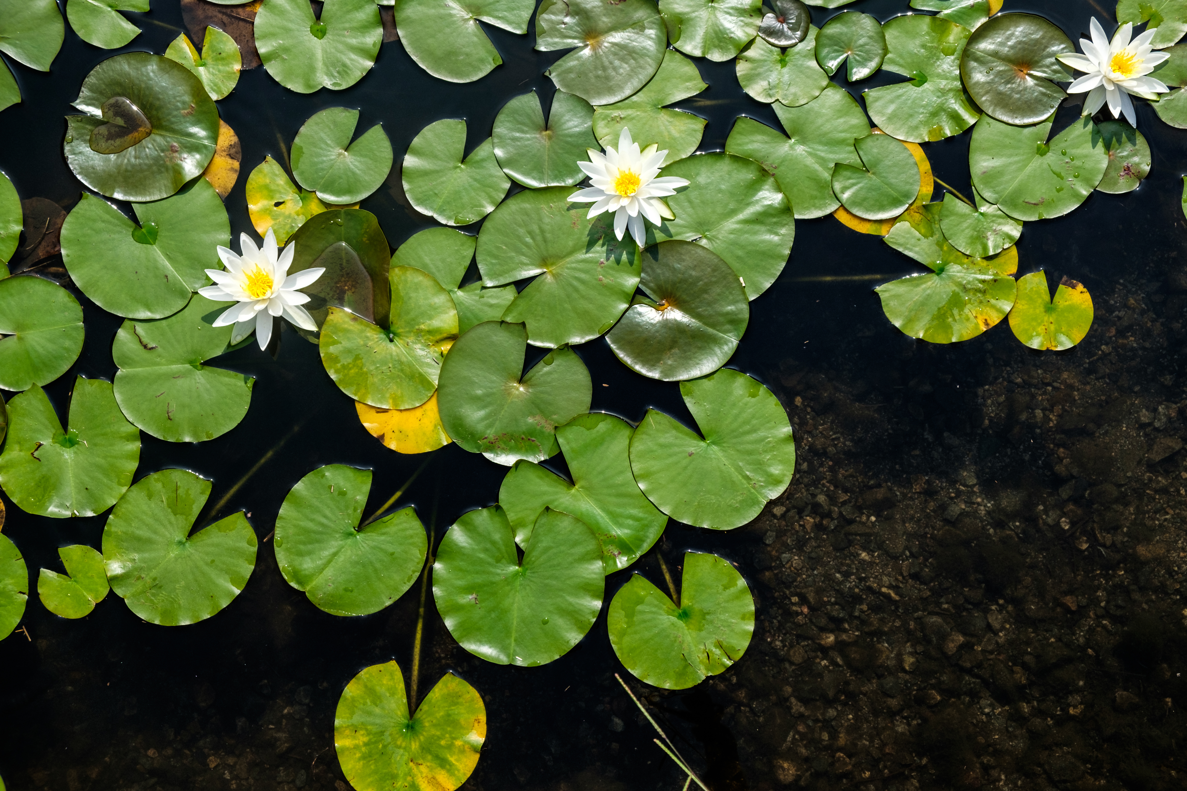 Aquatic Plants With Special Adaptive Features Sciencing