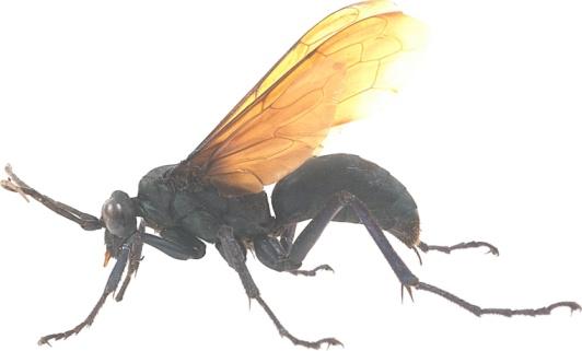 How to Treat a Centipede Bite