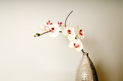 How To Trim Back Orchids After Blooming Home Guides Sf Gate