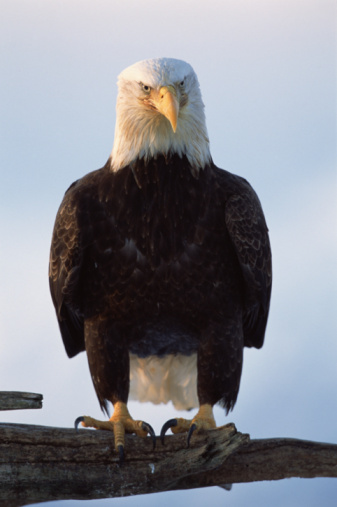 Birds Of Prey In North Carolina Animals Mom Com