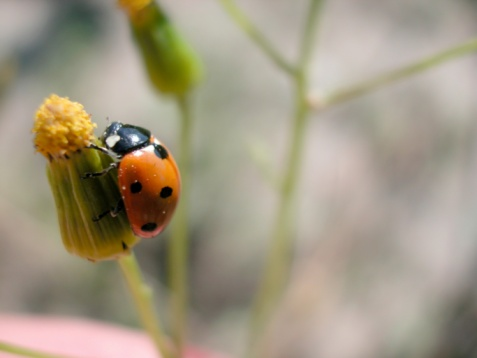 The Meanings of the Colors of Ladybugs