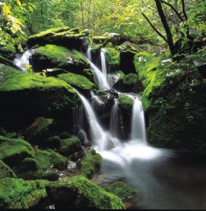 Selva Húmeda Tropical Ecosistema Para Niños
