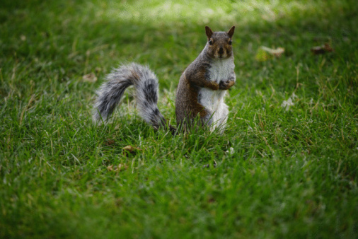 What Types of Foods Do Squirrels Eat?