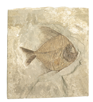 Carbon dating plant fossils found