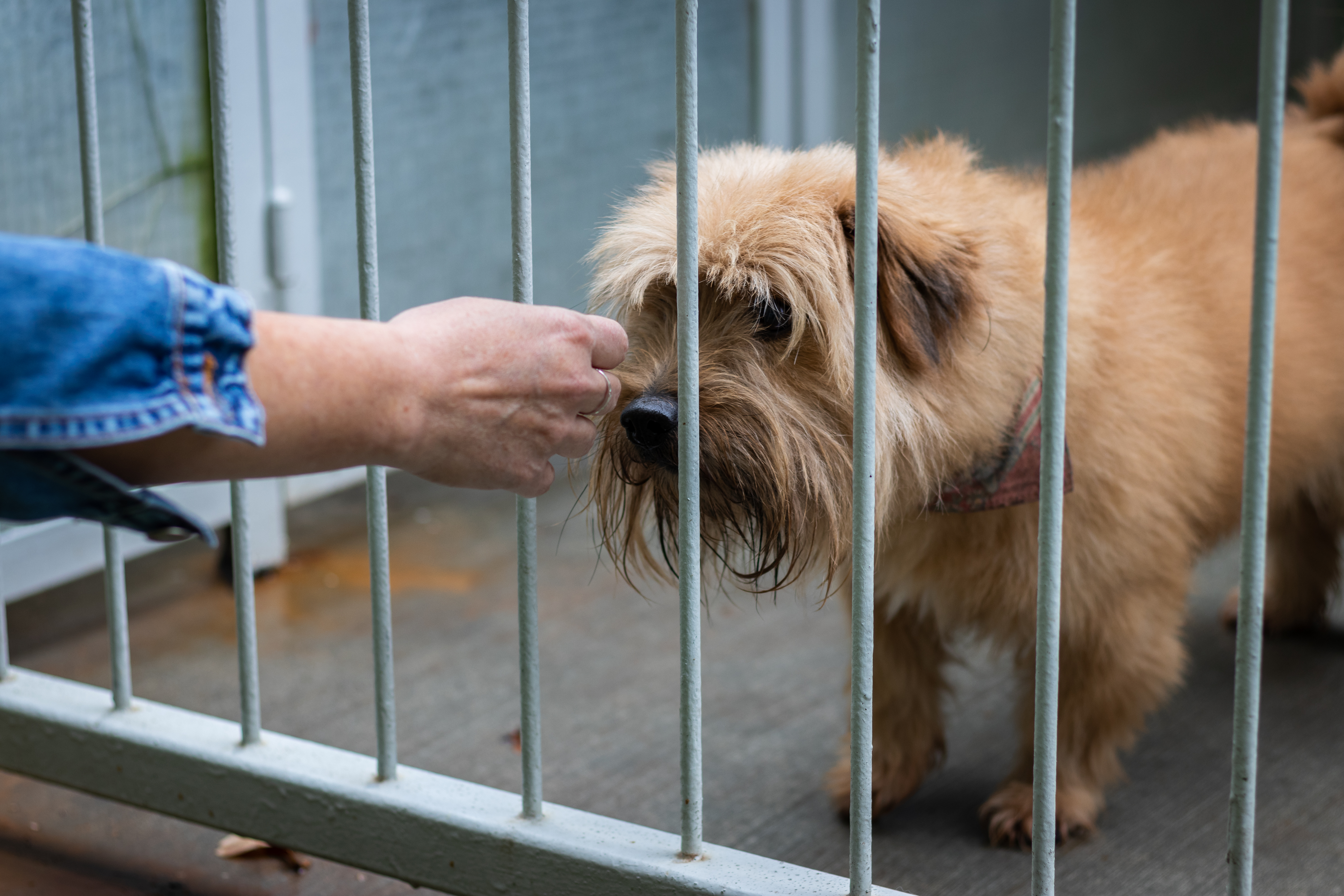 How to Give up Your Dog to the Humane Society | Cuteness
