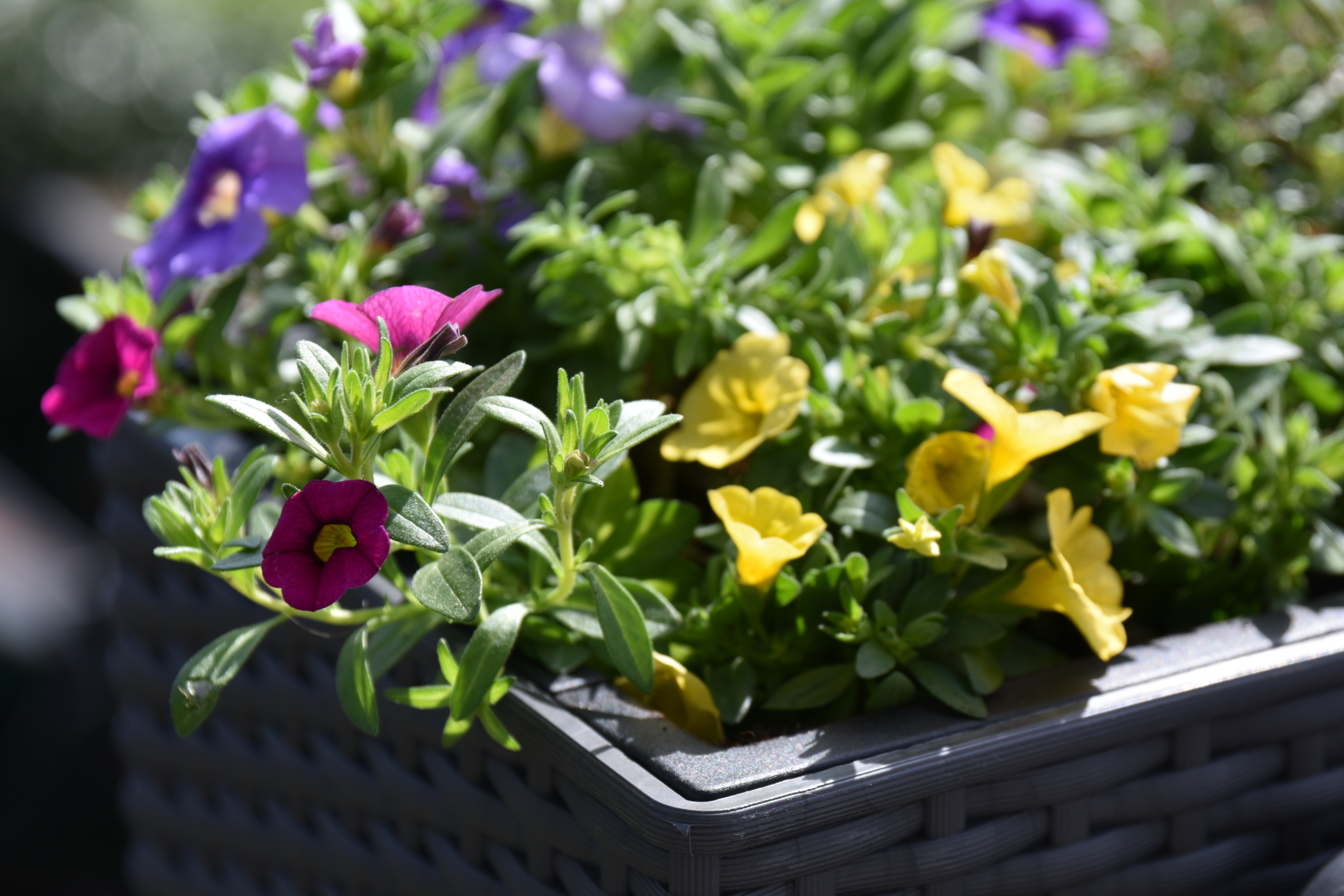 What Flowers Are Best For A Flower Box