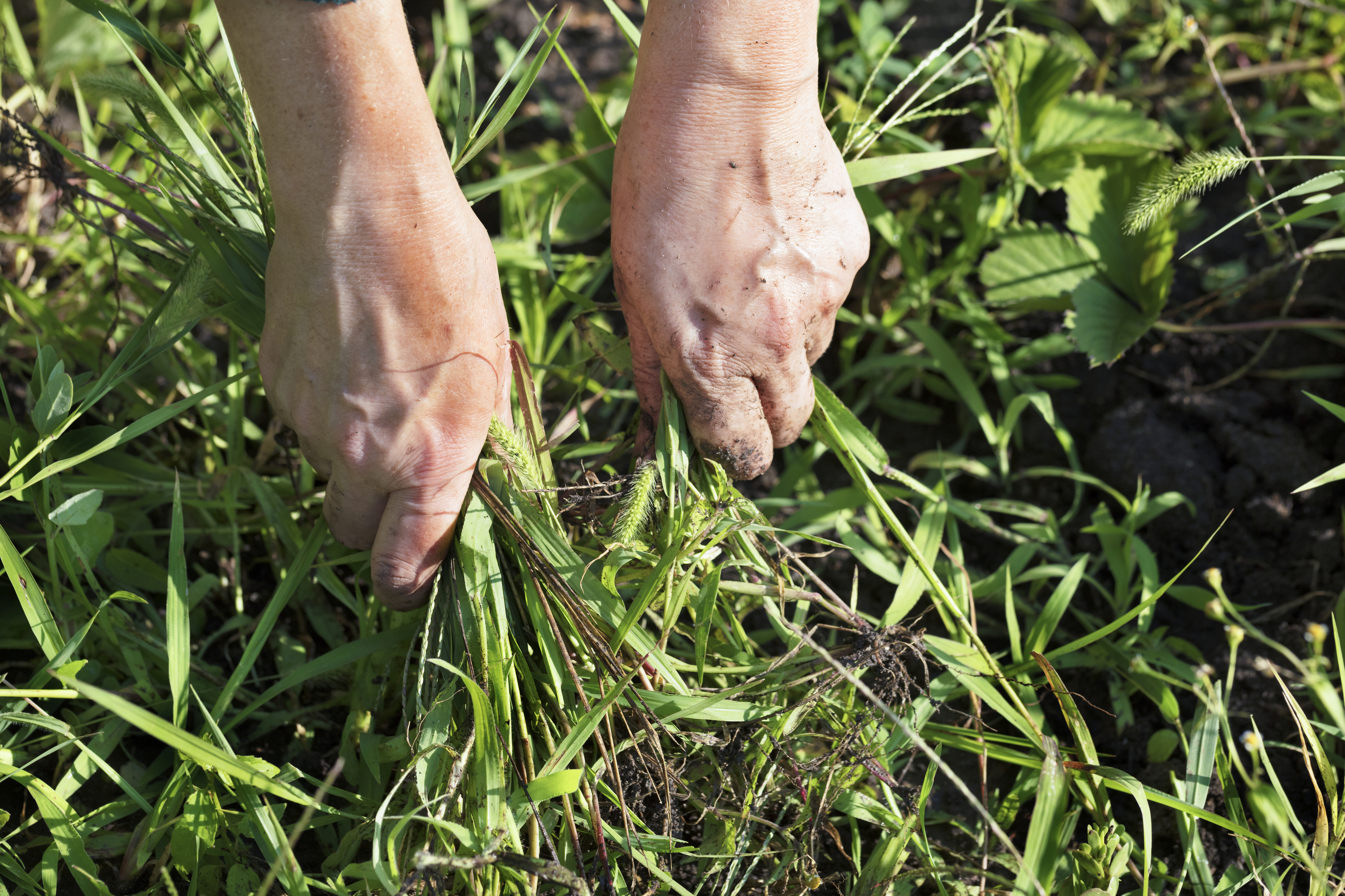 do you have to remove weeds under weed fabric? | home guides